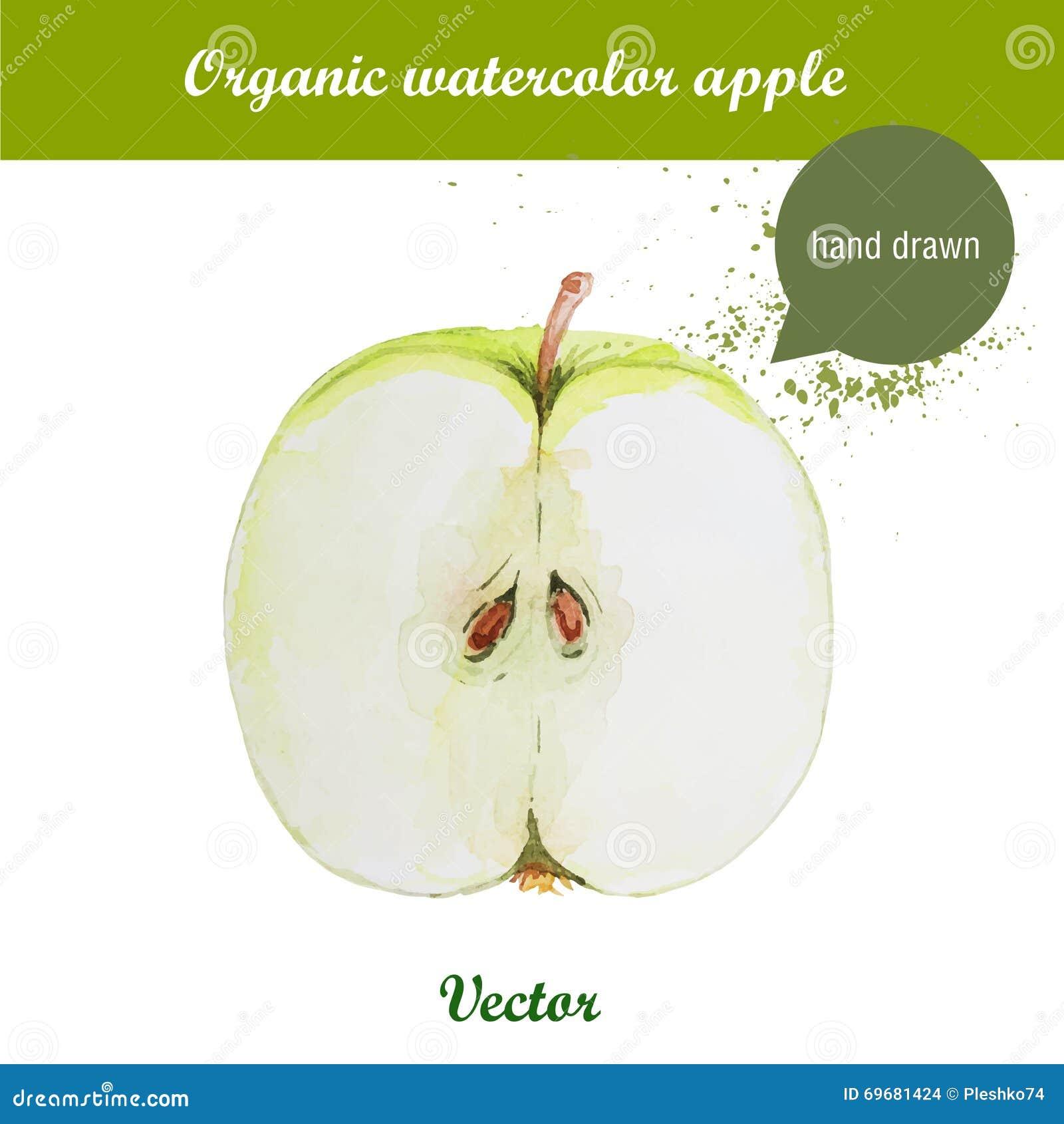 Vector a maçã verde tirada mão da aquarela com gotas da aquarela