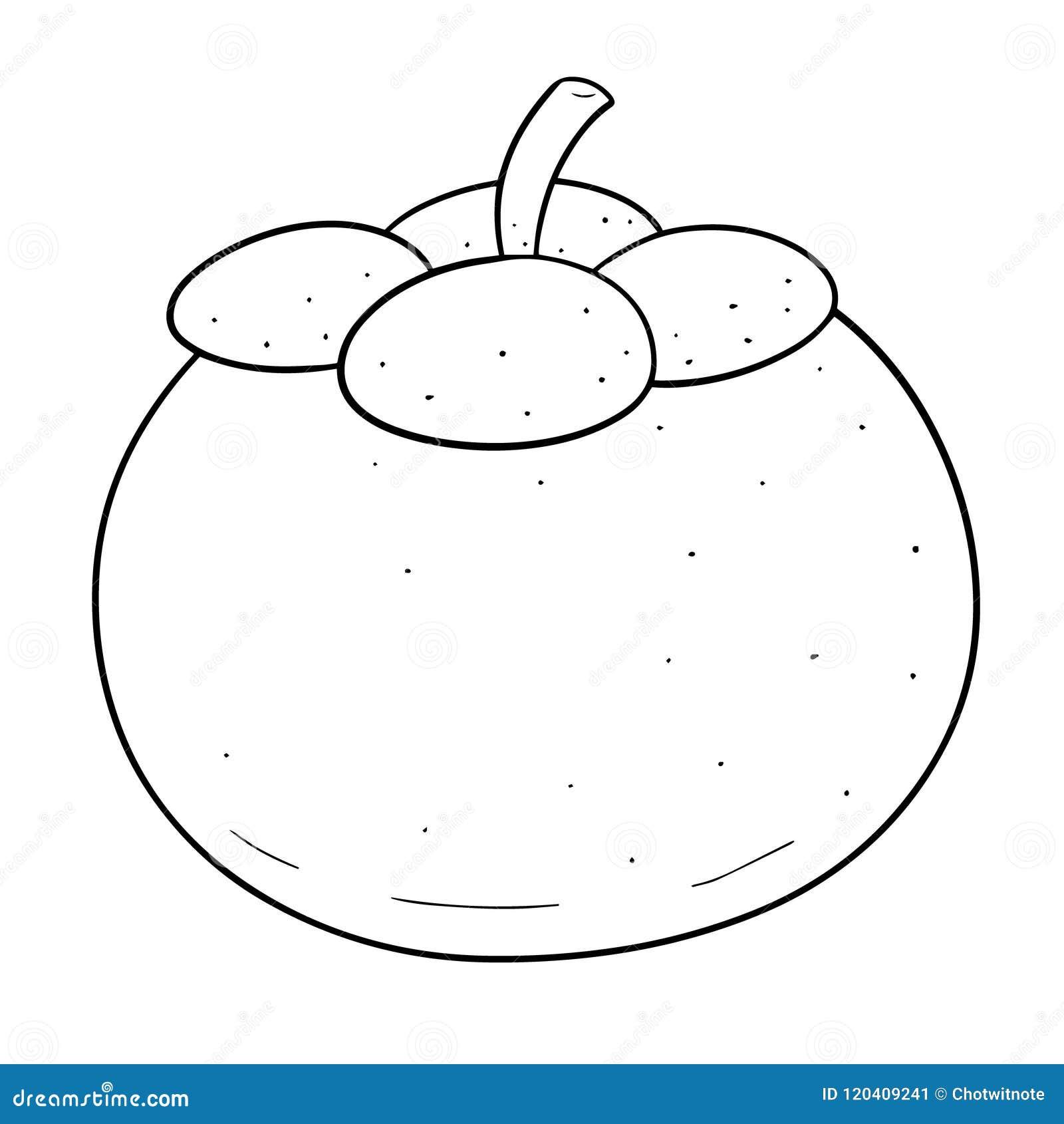 Vector Of Mangosteen Stock Vector Illustration Of Element 120409241