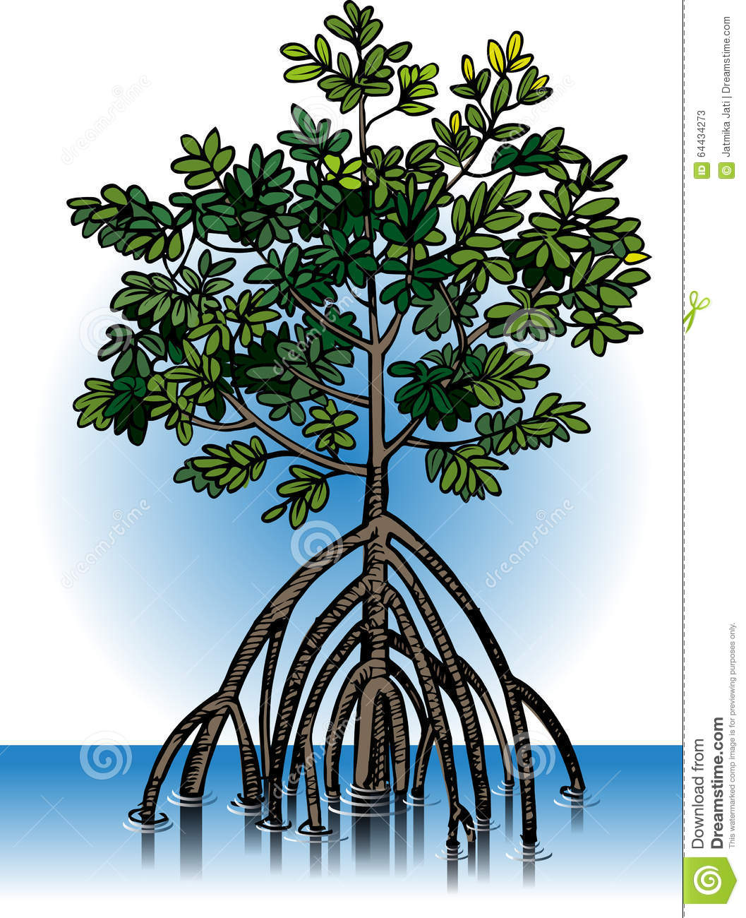 vector mangrove plants stock illustrations 8 vector mangrove plants stock illustrations vectors clipart dreamstime dreamstime com
