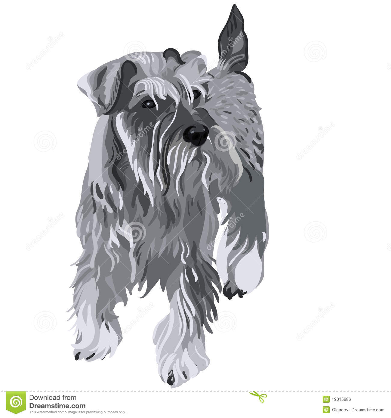 schnauzer coloring page - vector miniature schnauzer dog royalty free stock image