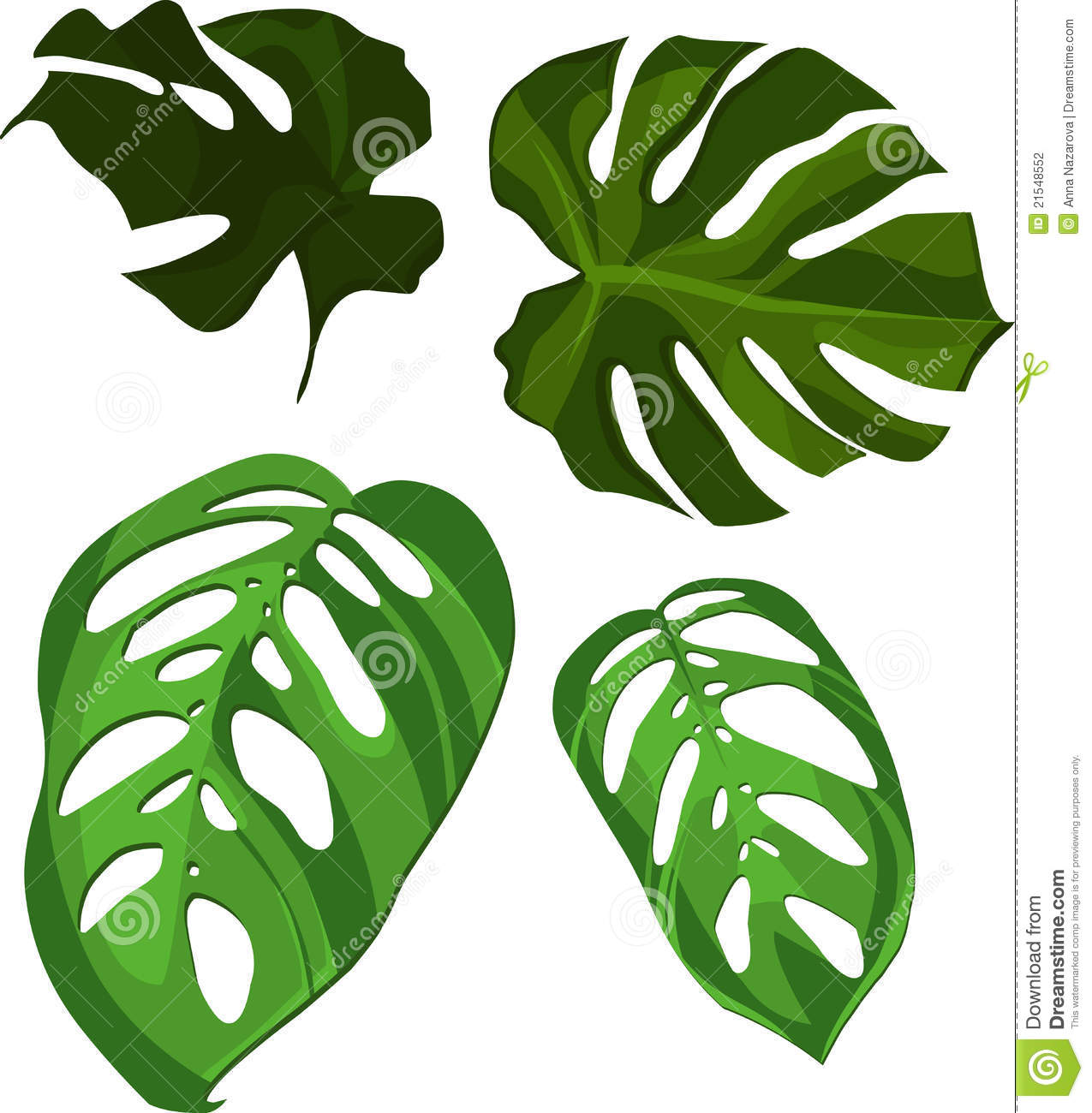 Vector monstera leaves stock photography image 21548552