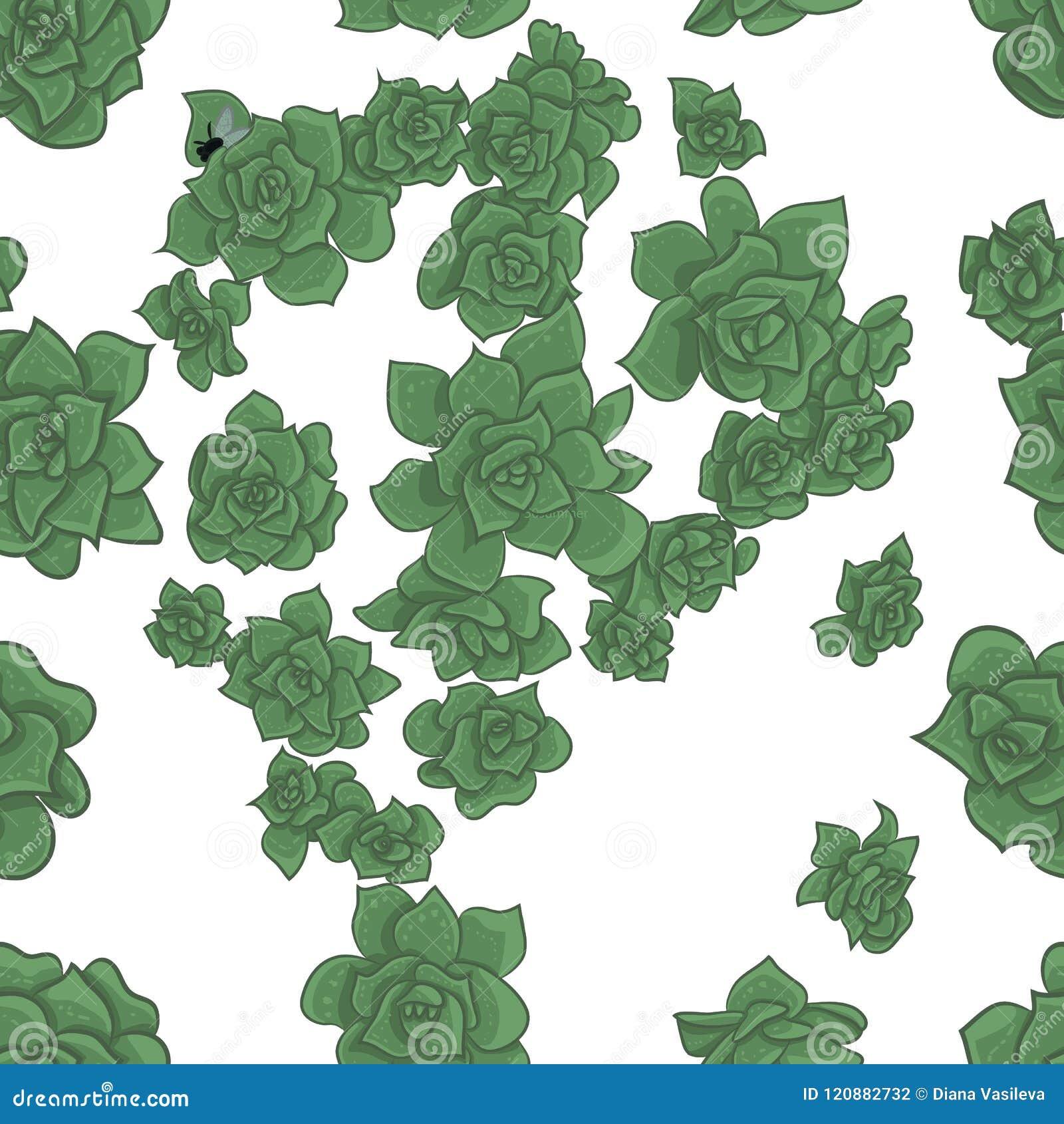Vector Naadloos van Succulents