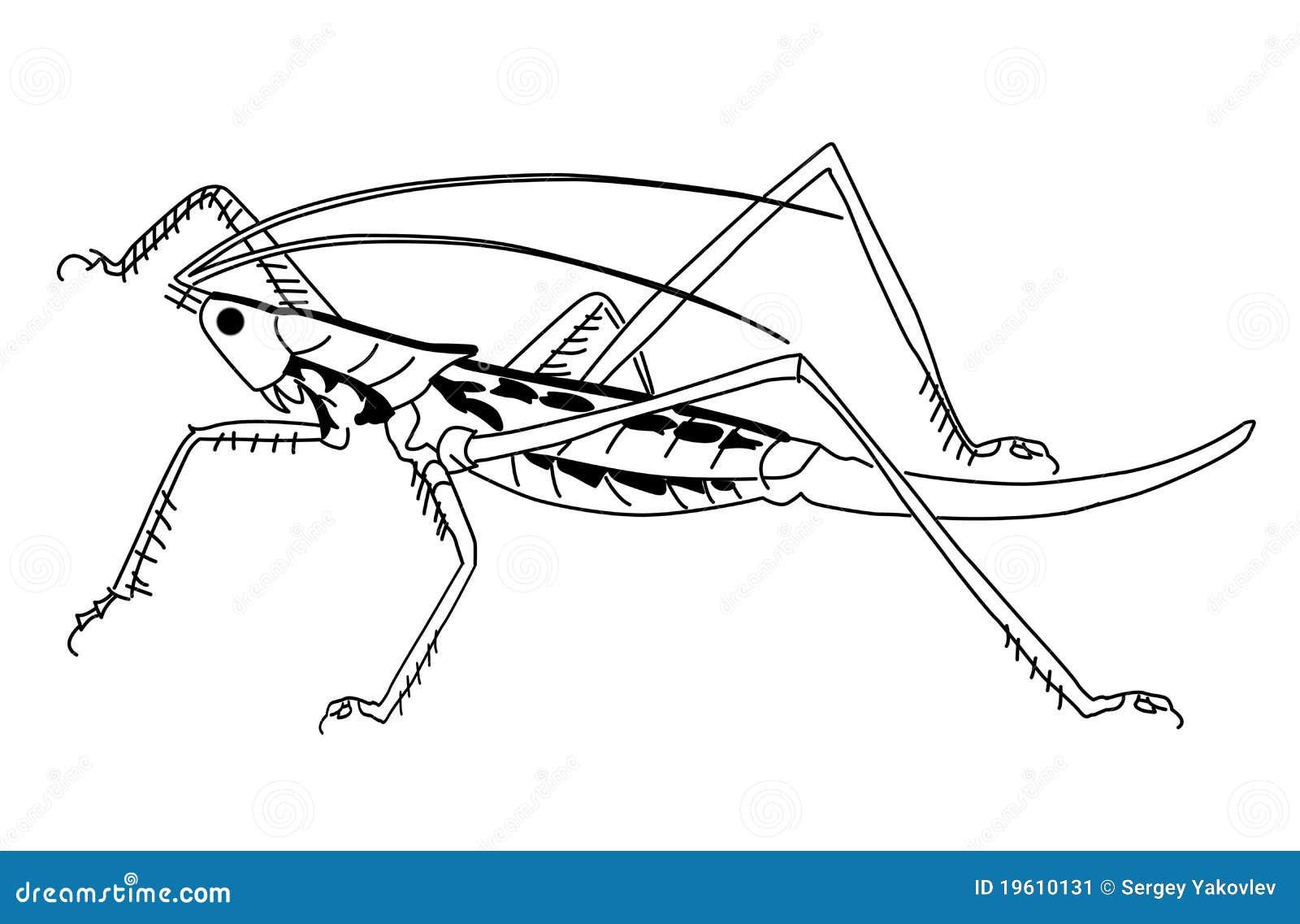 vector o gafanhoto da silhueta ilustração do vetor ilustração de