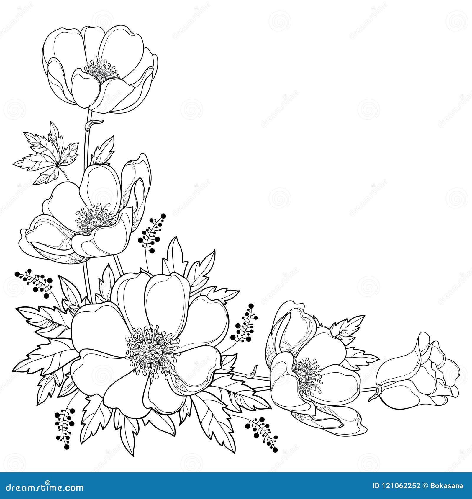Vector o ramalhete do canto do desenho da mão com a flor ou o Windflower da anêmona do esboço, o botão e a folha no preto isolada