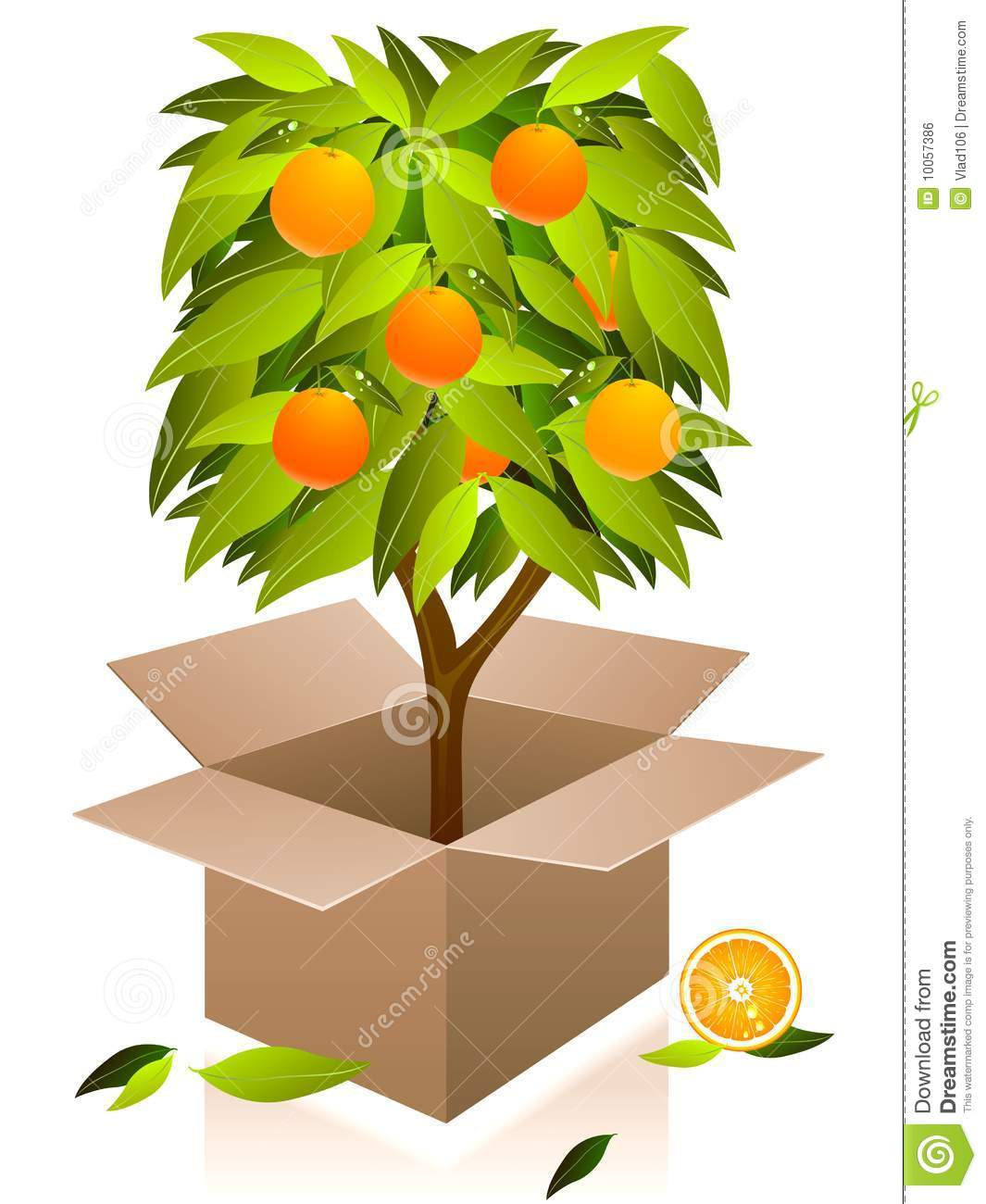 Vector orange tree.