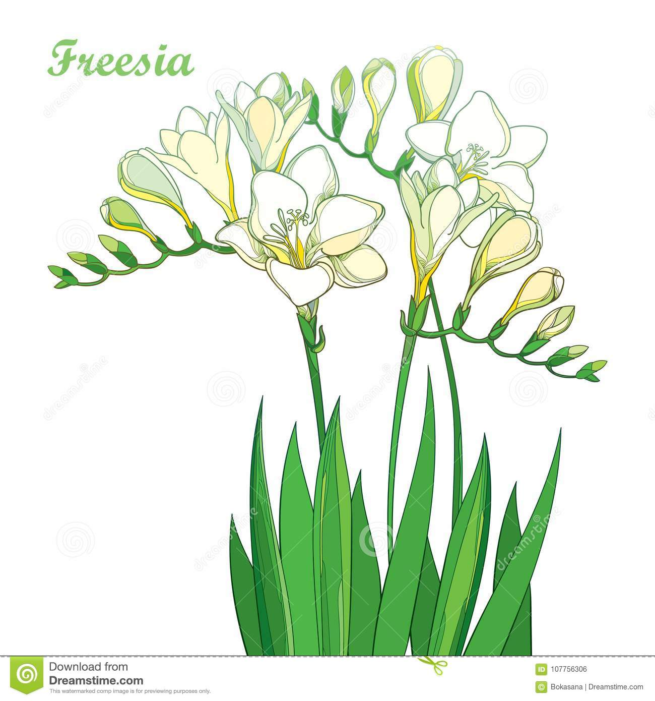Vector Outline Pastel White Freesia Flower Bunch With Bud And Green