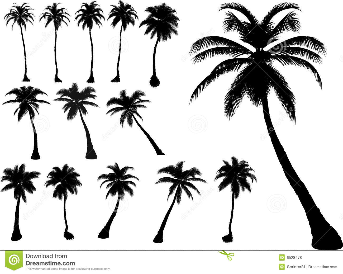 Vector Palms An... Palm Trees Outline