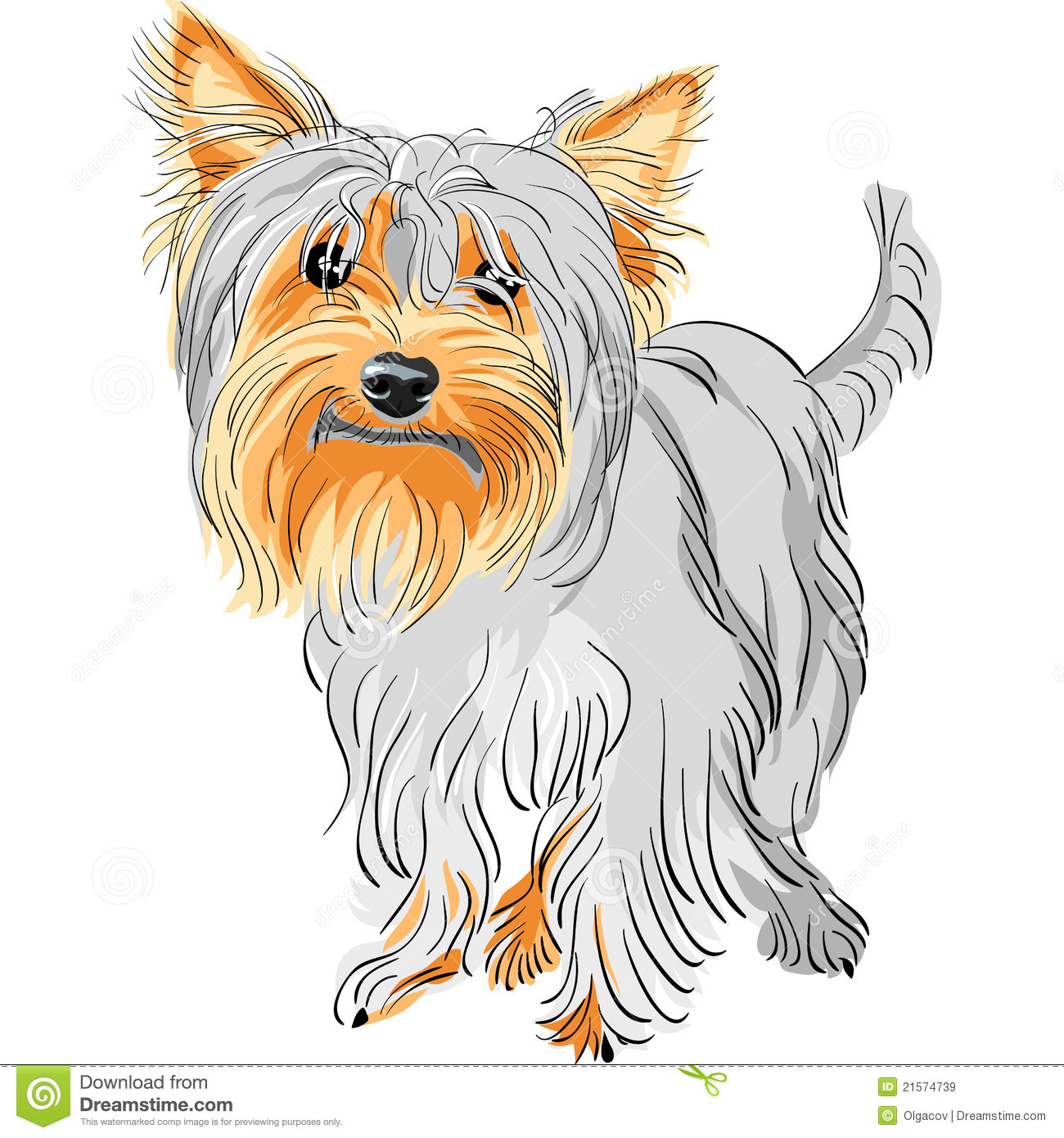 More similar stock images of ` Vector Pedigreed dog Yorkshire terrier ...