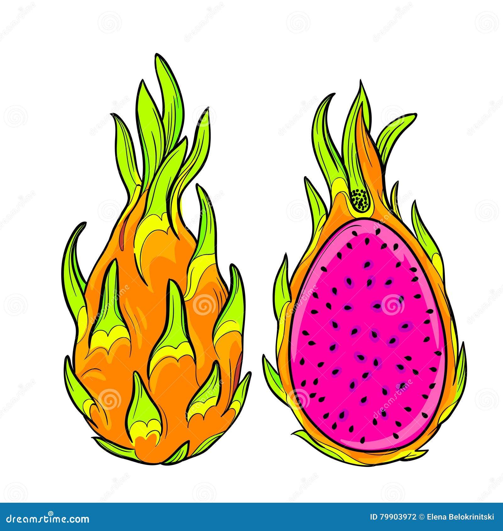 vector pitaya dragon fruit stock vector illustration of asian