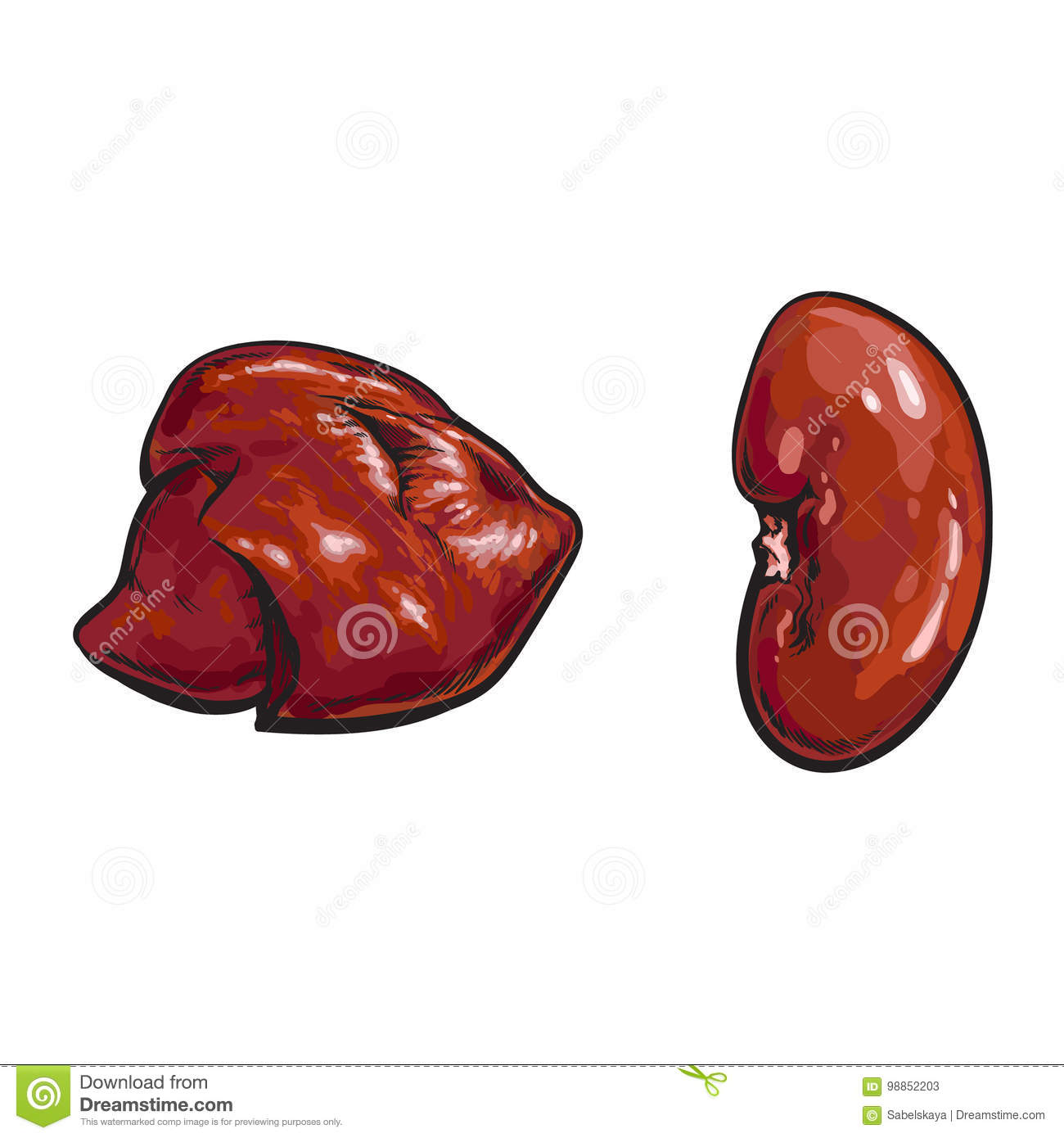 Vector Pork Raw Kidney Liver Offal Sketch Isolated Stock Vector ...