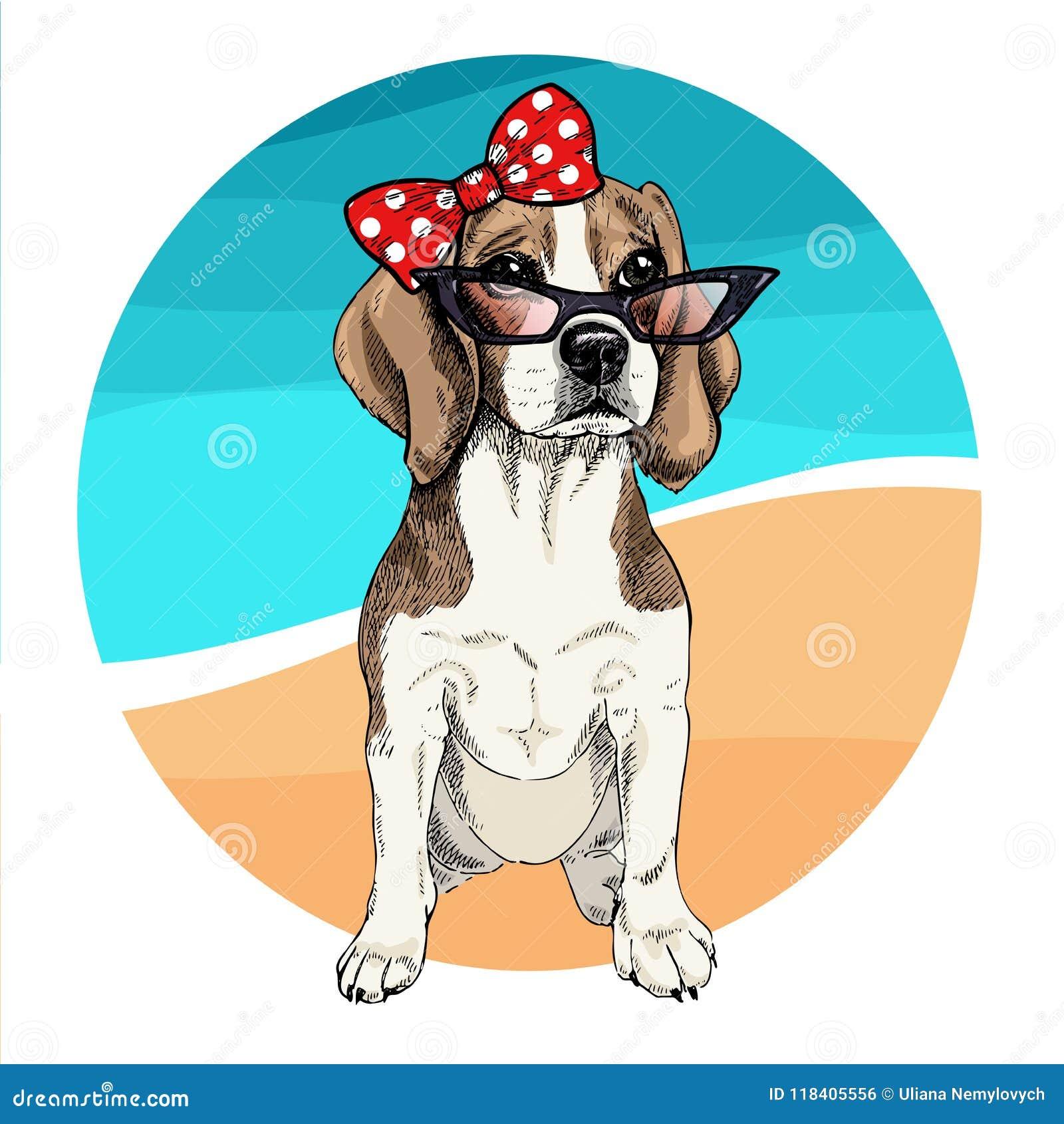 Vector portrait of beagle dog wearing sunglasses and retro bow. Summer fashion illustration. Vacation, sea, beach, ocean