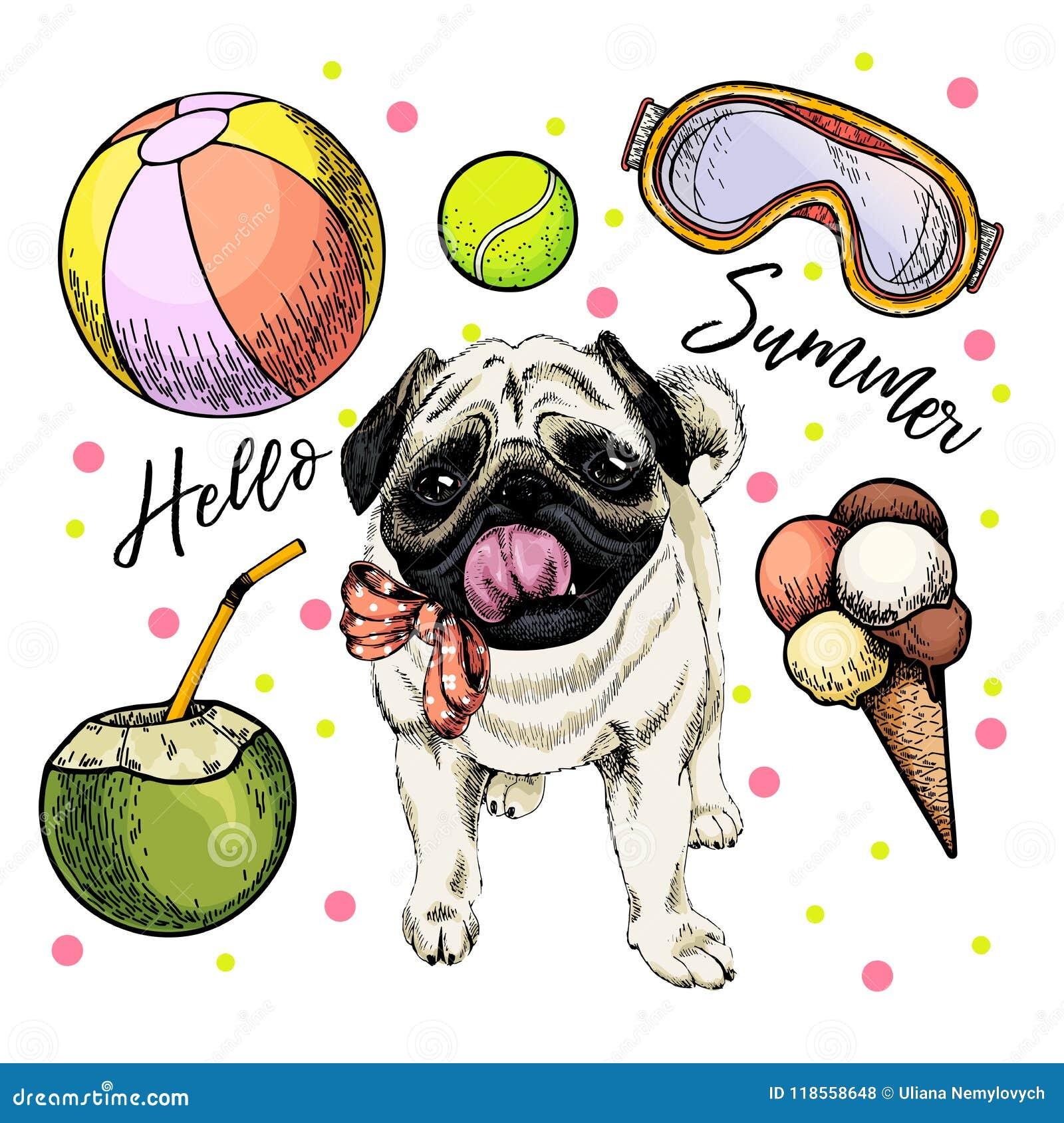 196005522544 Vector portrait of pug dog. Hello summer cartoon illustration. Coconut  cocktail, balls,