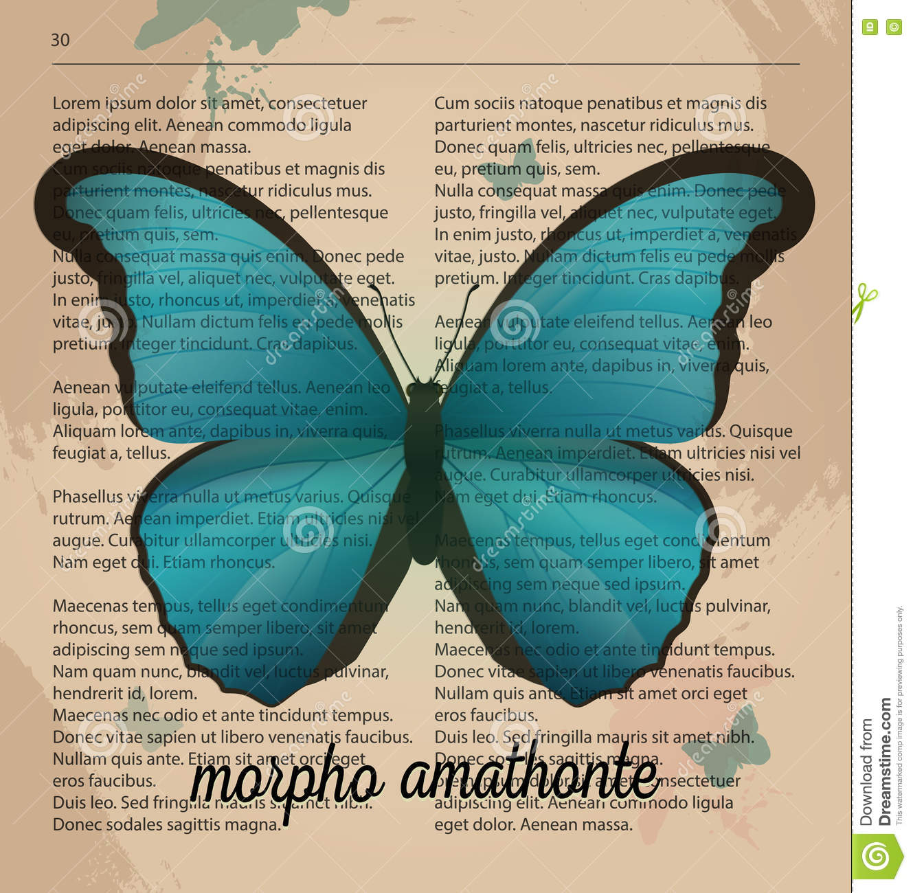 photograph about Printable Vintage Dictionary Pages referred to as Vector Print Blue Butterfly Morpho Amathonte. Printable Artwork