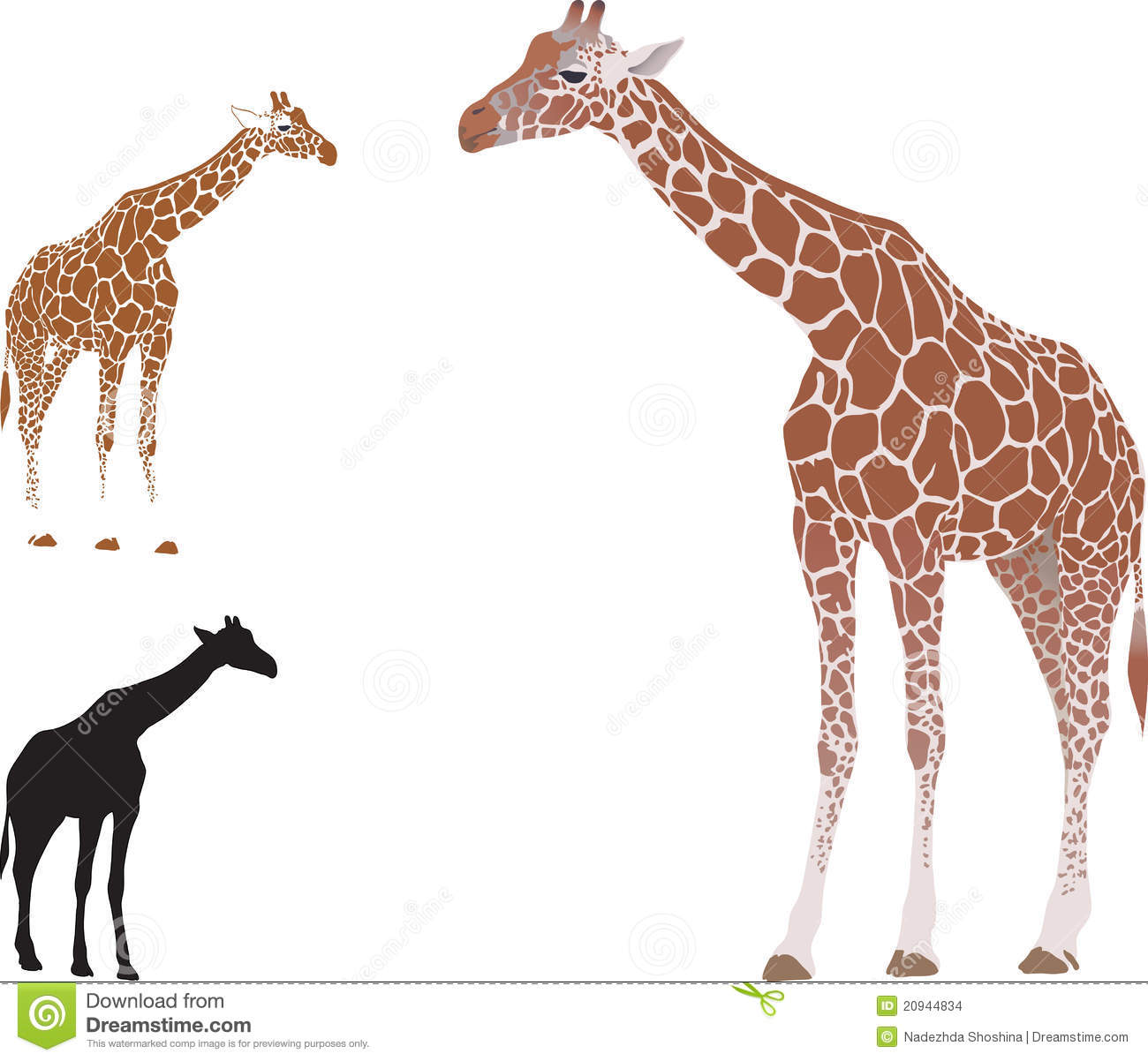 Vector realistic giraffe stock images image 20944834