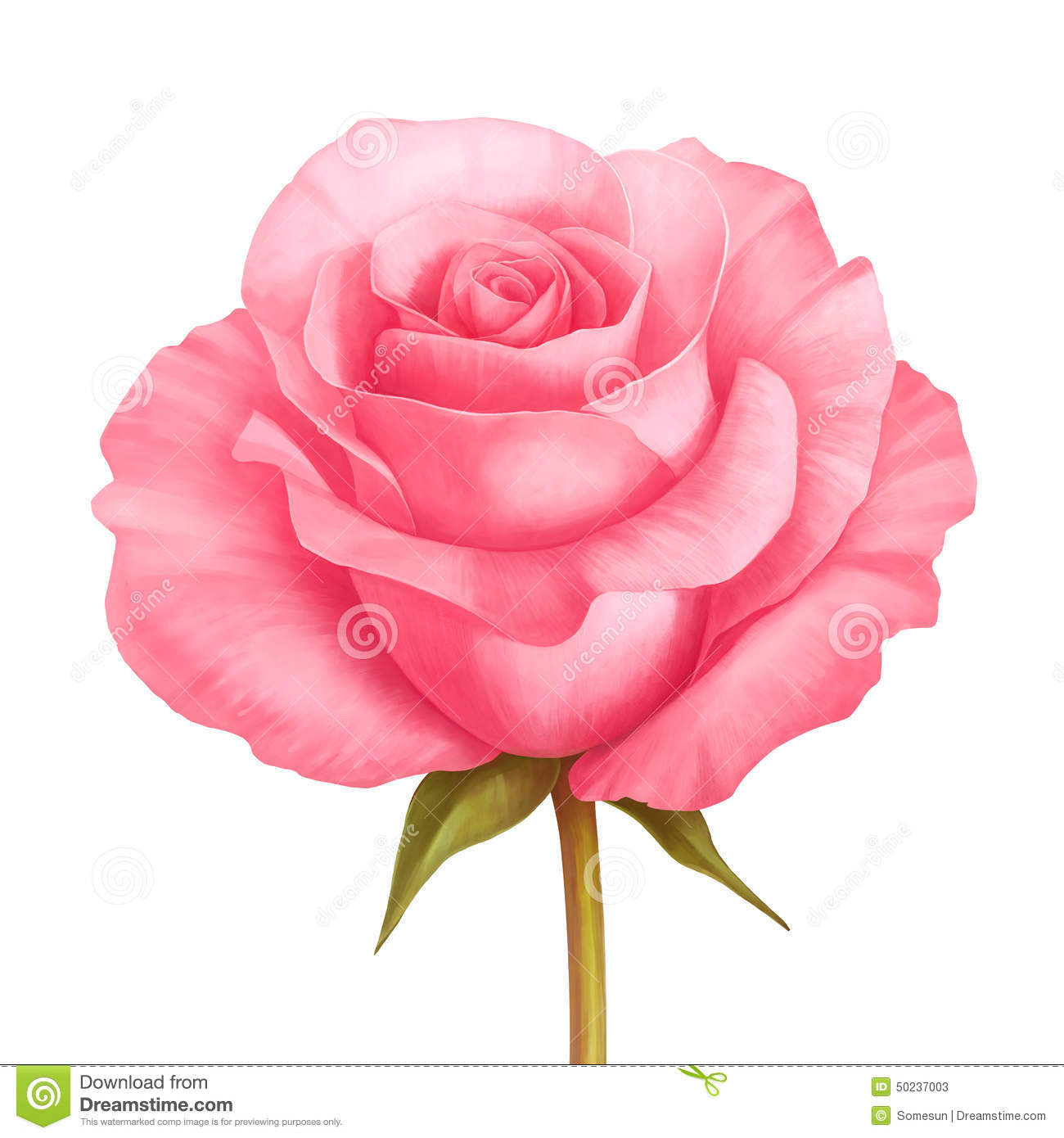 Vector Rose Pink Flower Illustration Isolated On White Stock Vector