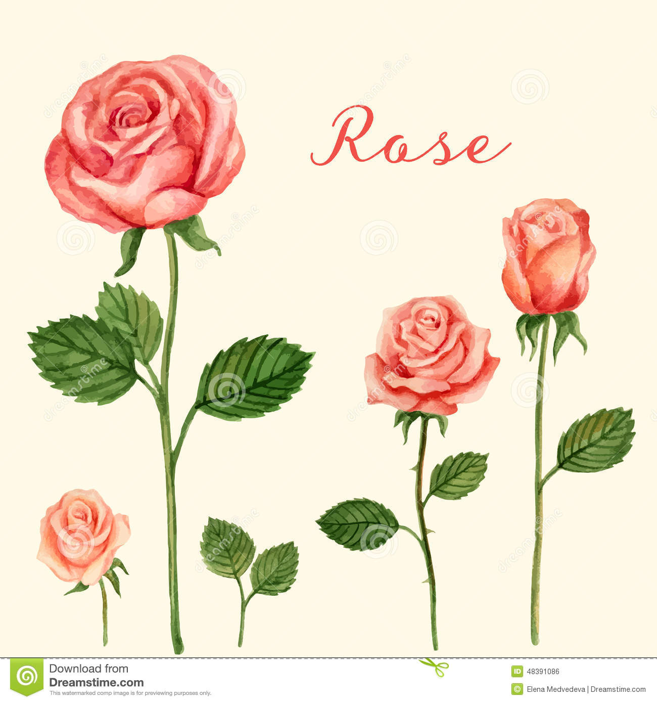 Vector rose watercolor stock vector illustration of drawn 48391086 vector rose watercolor stopboris Image collections