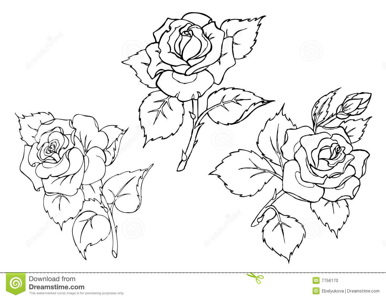 vector roses trace of freehand drawing stock photo image 7756170 vector roses trace freehand drawing 7756170