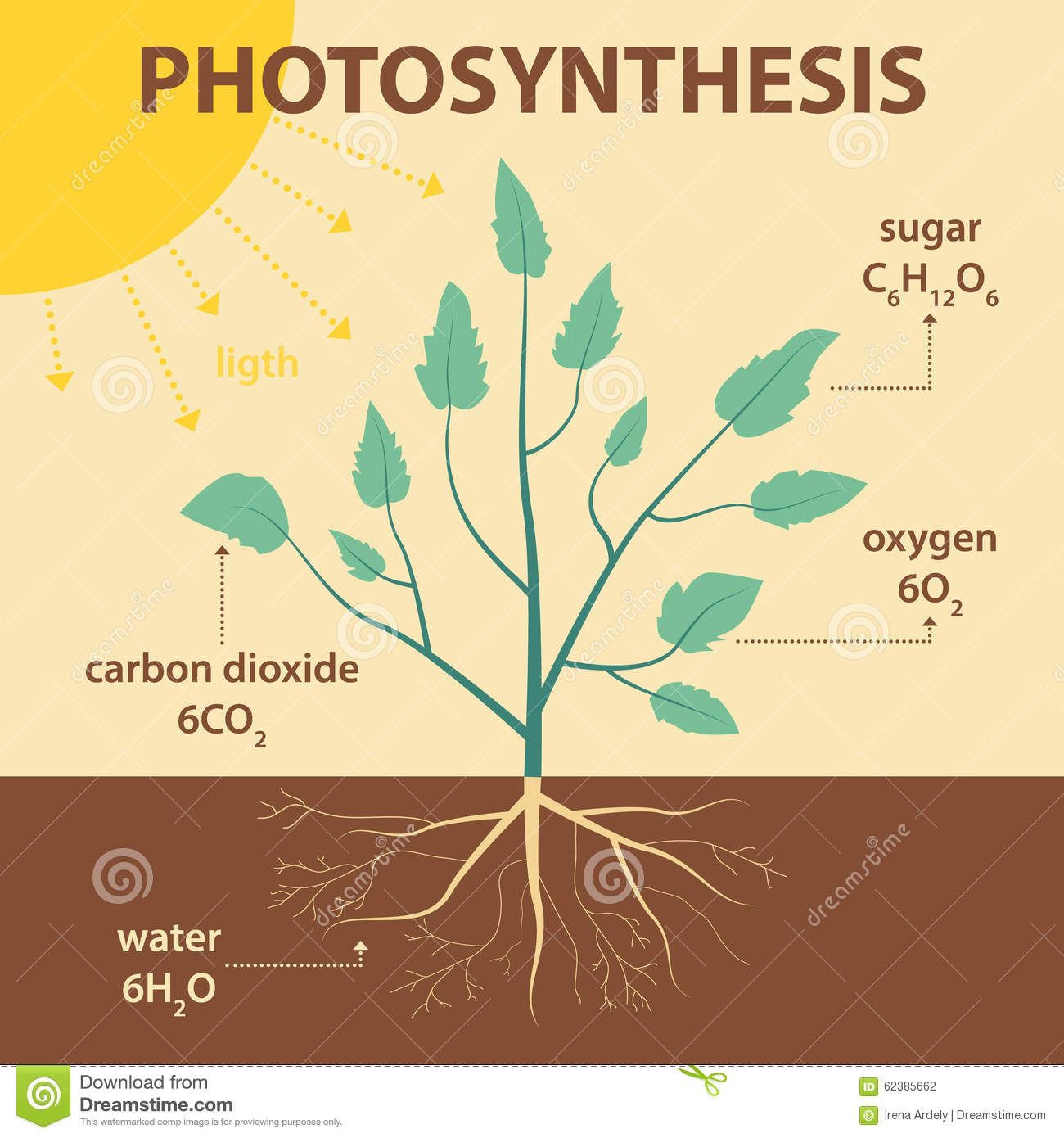 Vector Schematic Illustration Showing Photosynthesis Of Plant ...