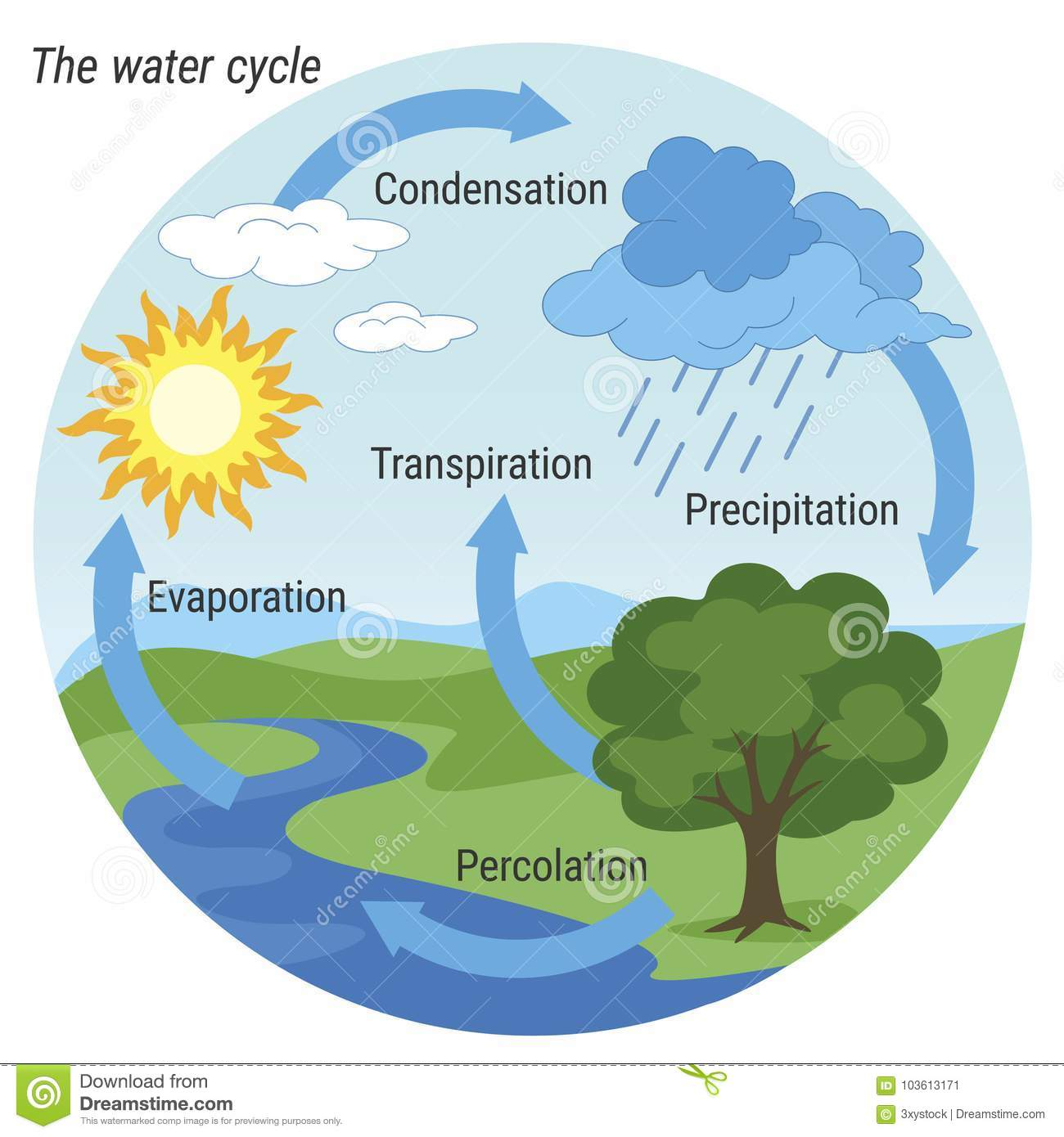 Water Cycle Colour Stock Vector Illustration Of Graphic 103613171 Schematic Representation Nature