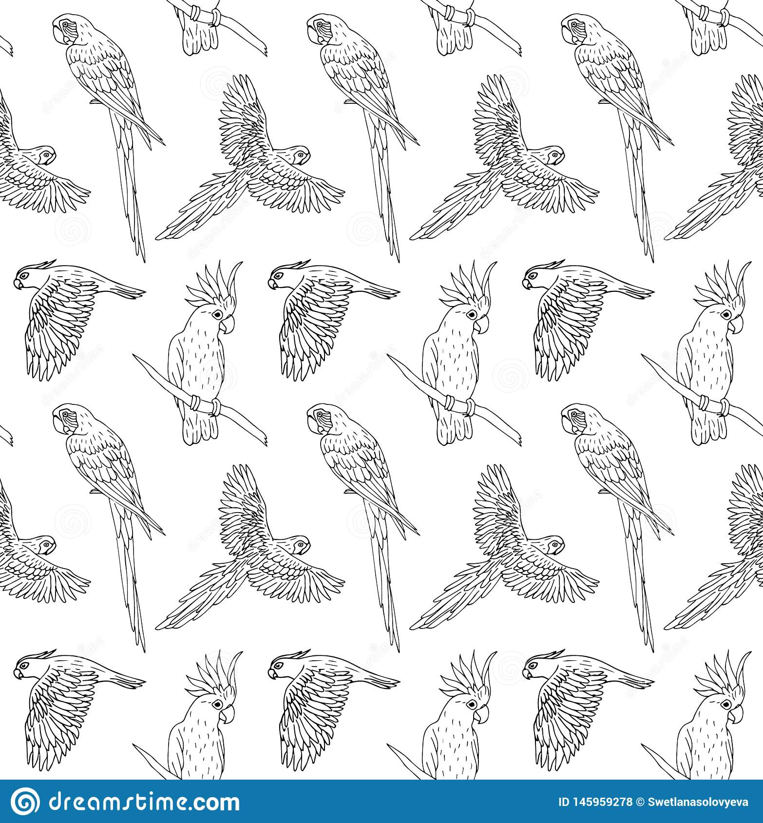 Vector seamless pattern of black ink line hand drawn parrot flying and sitting on white background