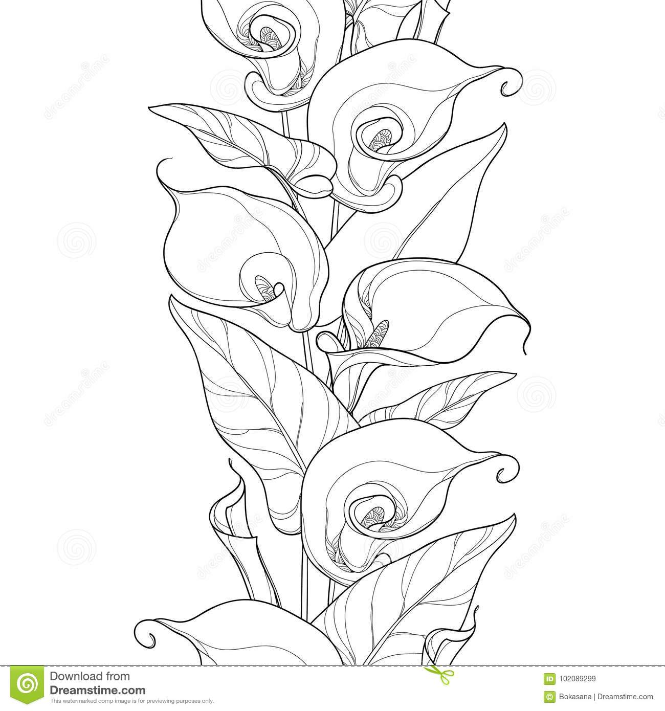 Vector Seamless Pattern With Outline Calla Lily Flower Or