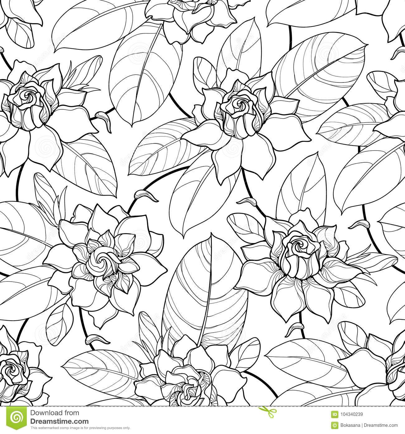 Ornate Flower Bud And Leaves In Black On The White Background Floral Pattern With Gardenia Contour Style For Summer Design Coloring Book