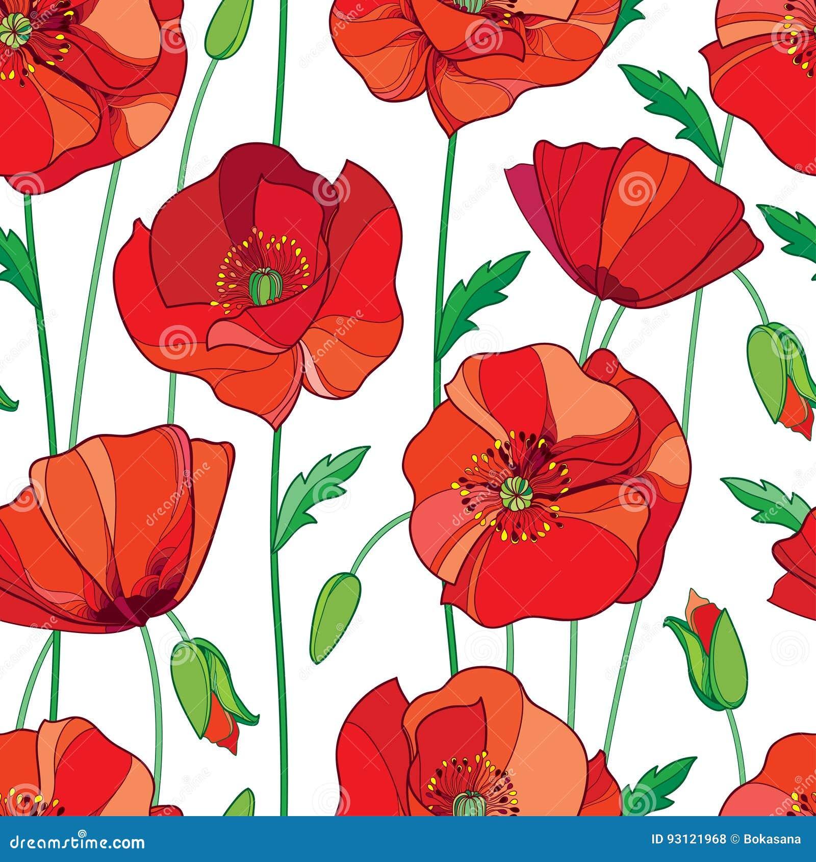 Poppy Flower Outline Gallery - Fresh Lotus Flowers