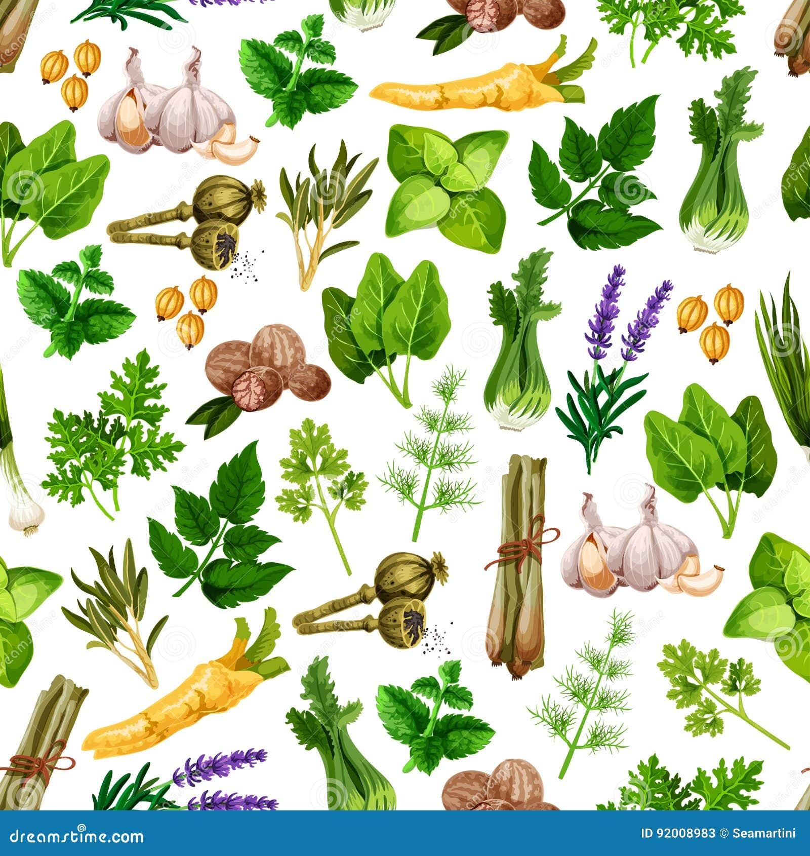 Vector seamless pattern of spice herb seasonings