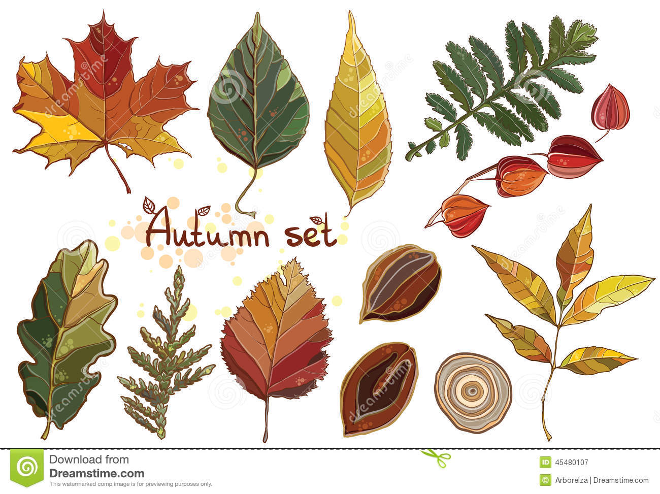 Vector set with autumn set leaves, nuts, tree.