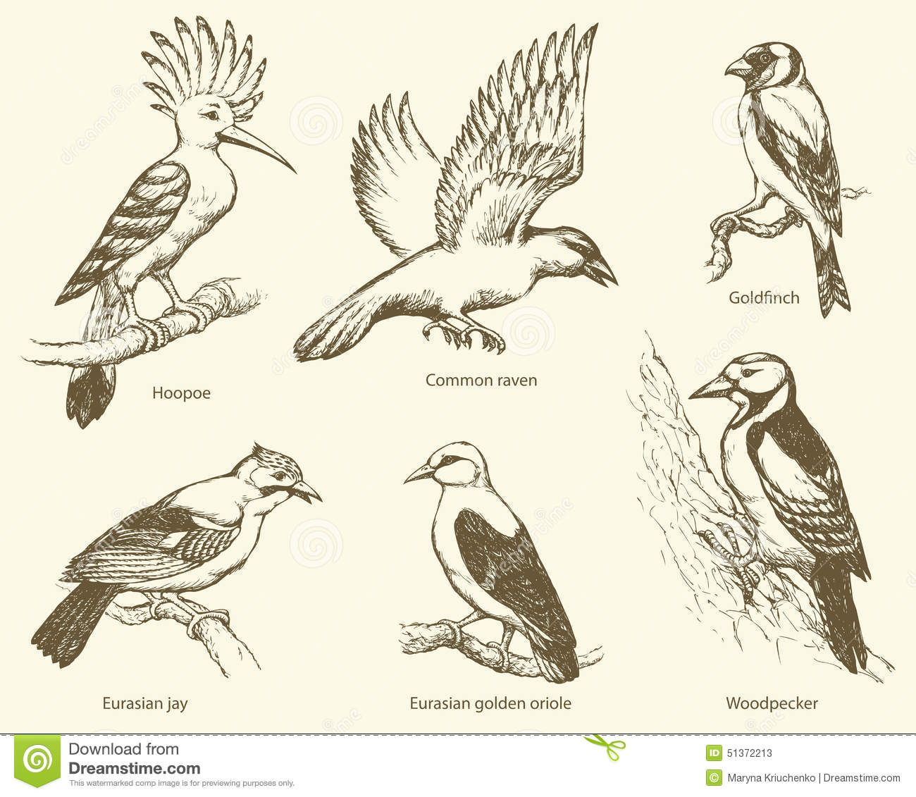 essay on hoopoe bird Hoopoes are colourful birds found across afro-eurasia, notable for their  distinctive crown of feathers three living and one extinct species are  recognized,.