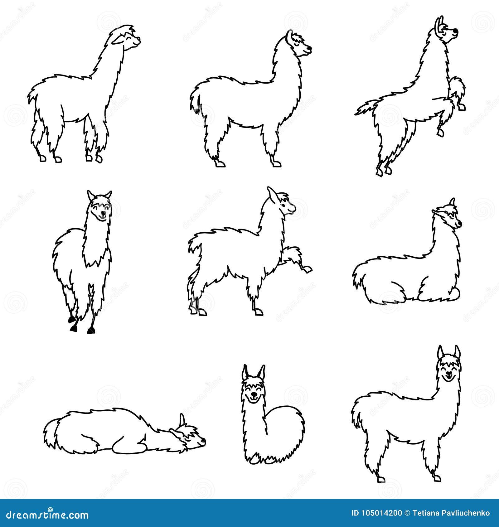 Hand Drawn Peru Animal Guanaco Alpaca Vicuna Stock Vector
