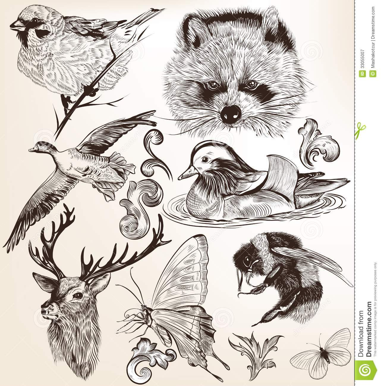 Detailed Line Drawings Of Animals : Vector set of detailed hand drawn animals in vintage style