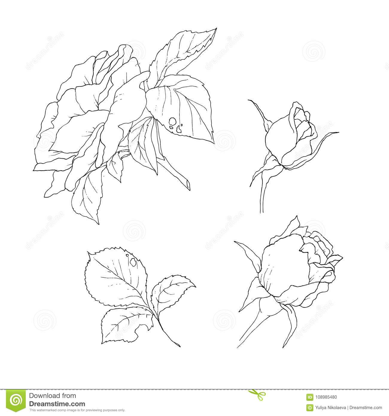 Vector Set Of Detailed Isolated Outline Rose Bud Sketches In Black