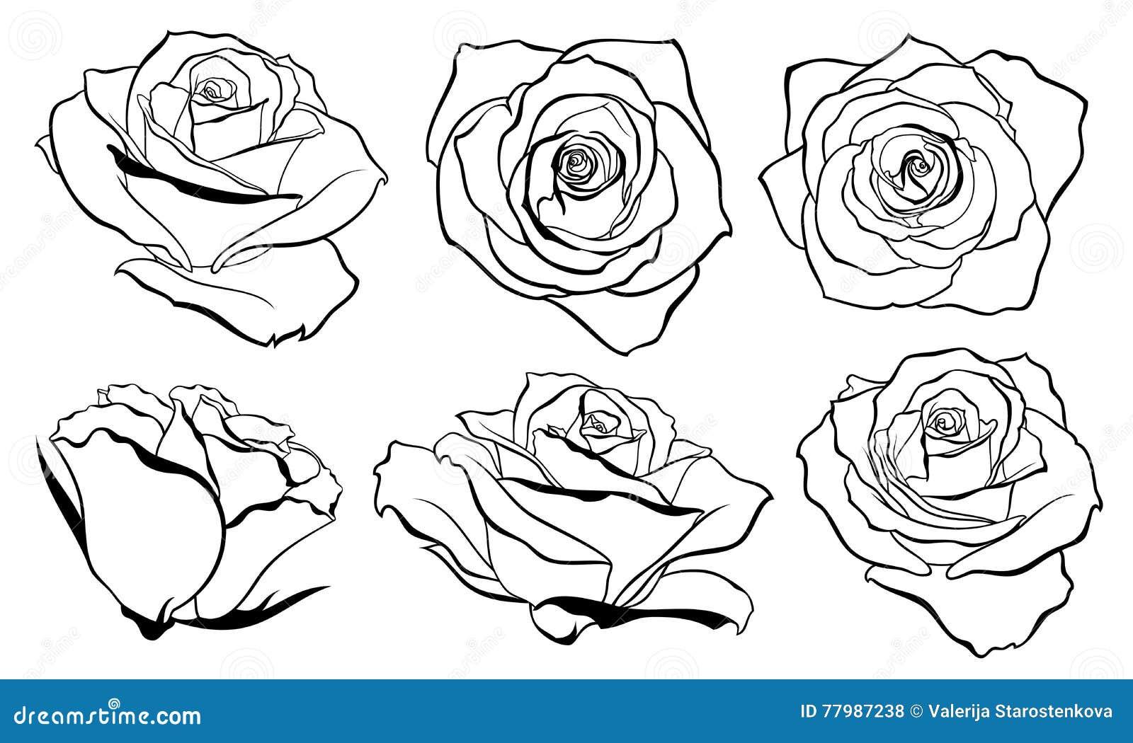 Tea pu erh set of vector sketches cartoon vector