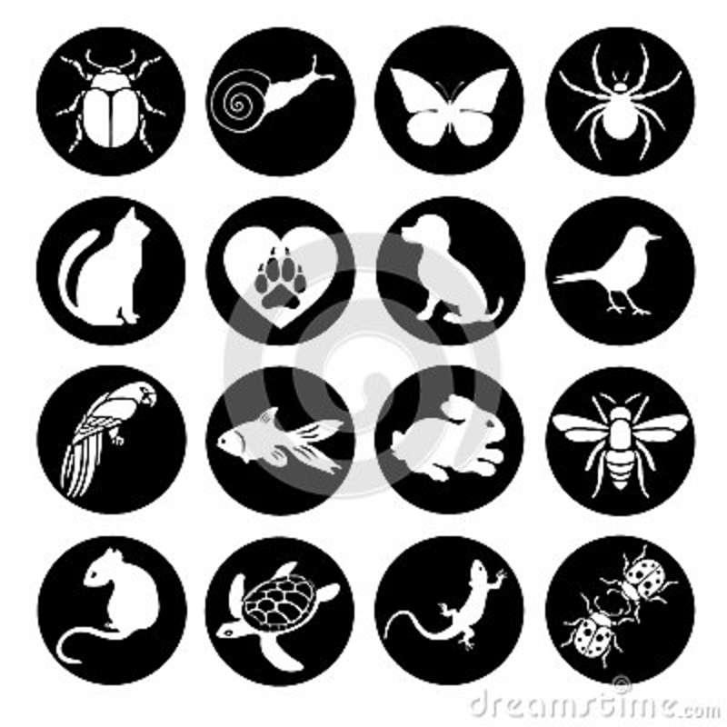 Vector Set Flat Web Icons Animals And Insects. Black White A Round ...