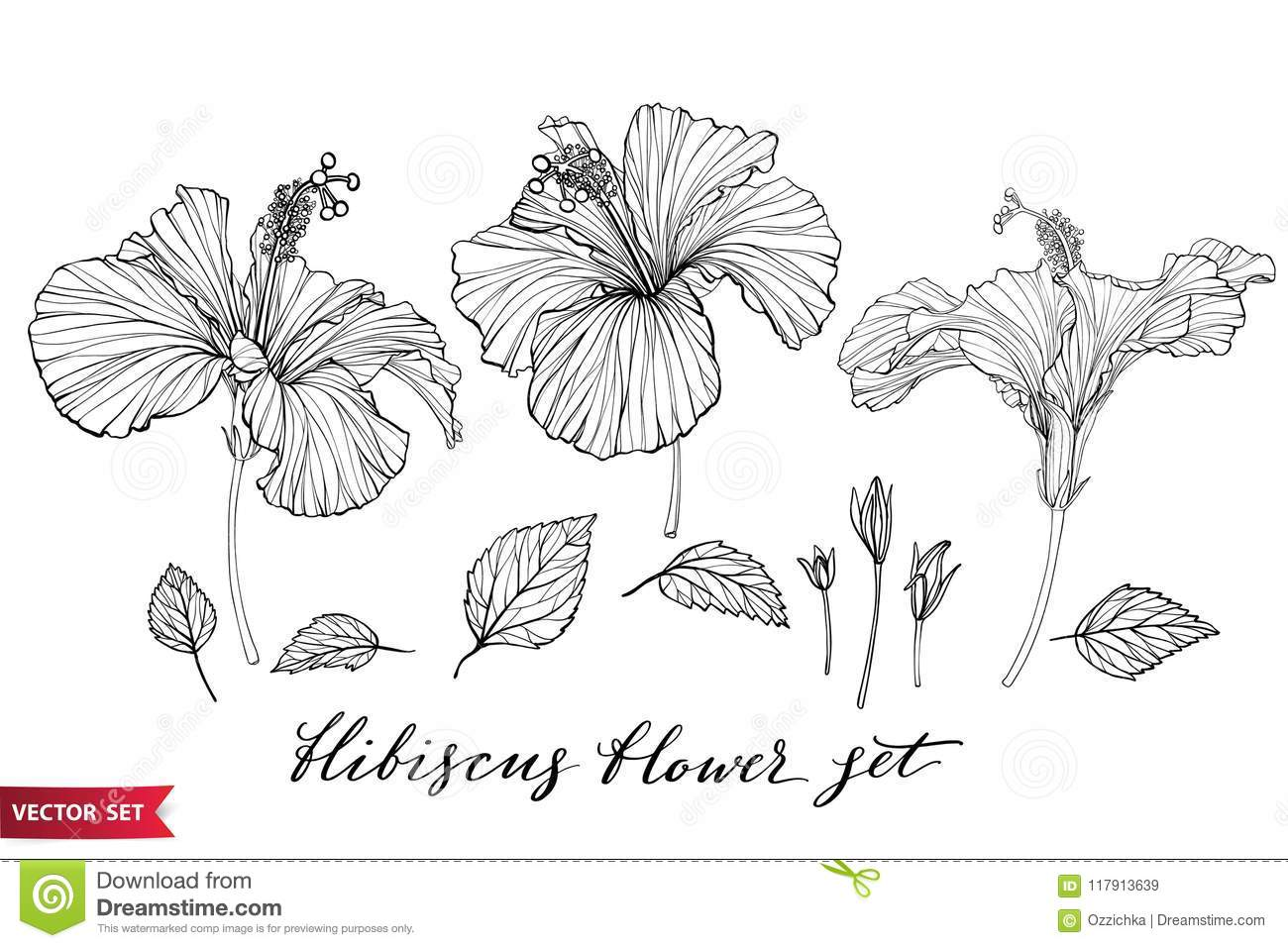 Vector Set Of Hand Drawing Hibiscus Flowers Different Shapes