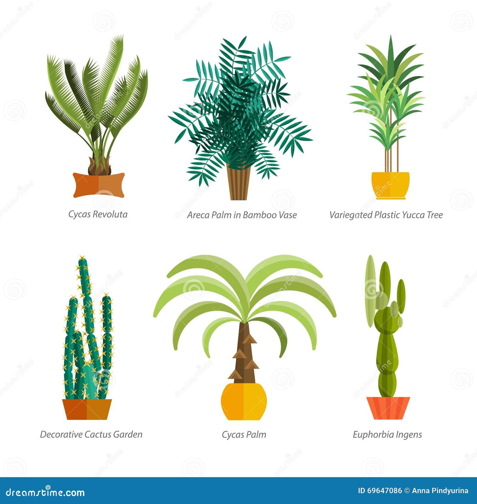 Vector Set Of Indoor Tree Home Plants In Pots. Illustration