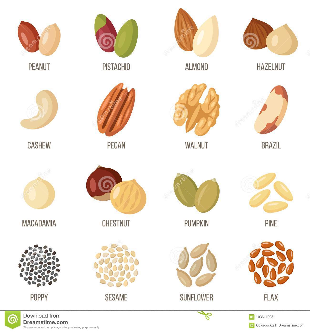 Different Types Of Nuts And Seeds  Vector Illustration