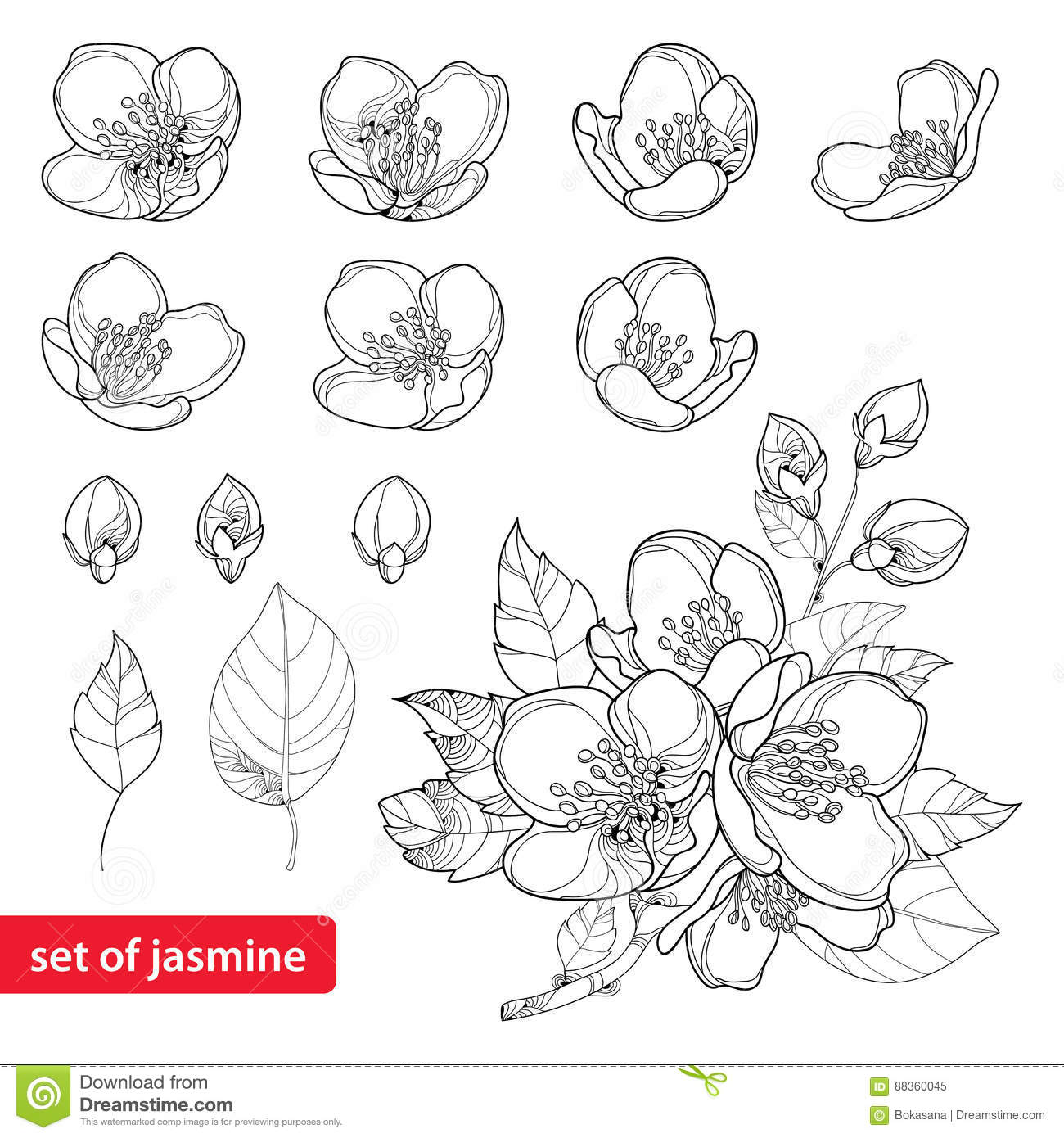 Vector Set With Outline Jasmine Flowers Bud And Leaves In Black