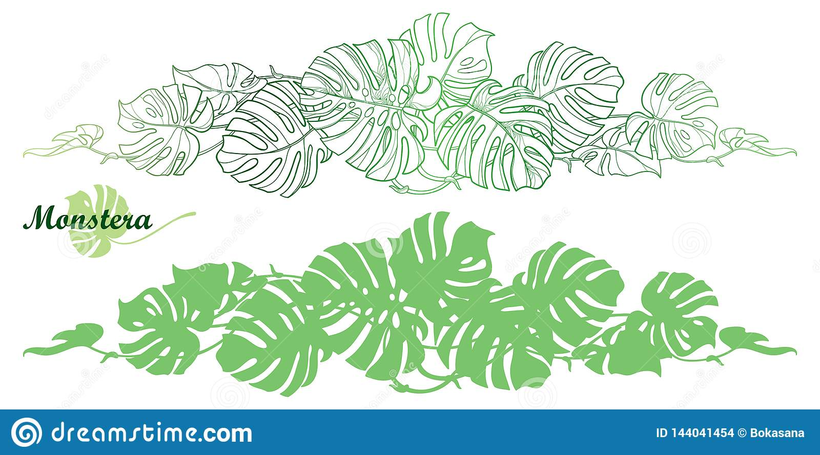 Vector Set With Outline Tropical Monstera Or Swiss Cheese Plant Leaf