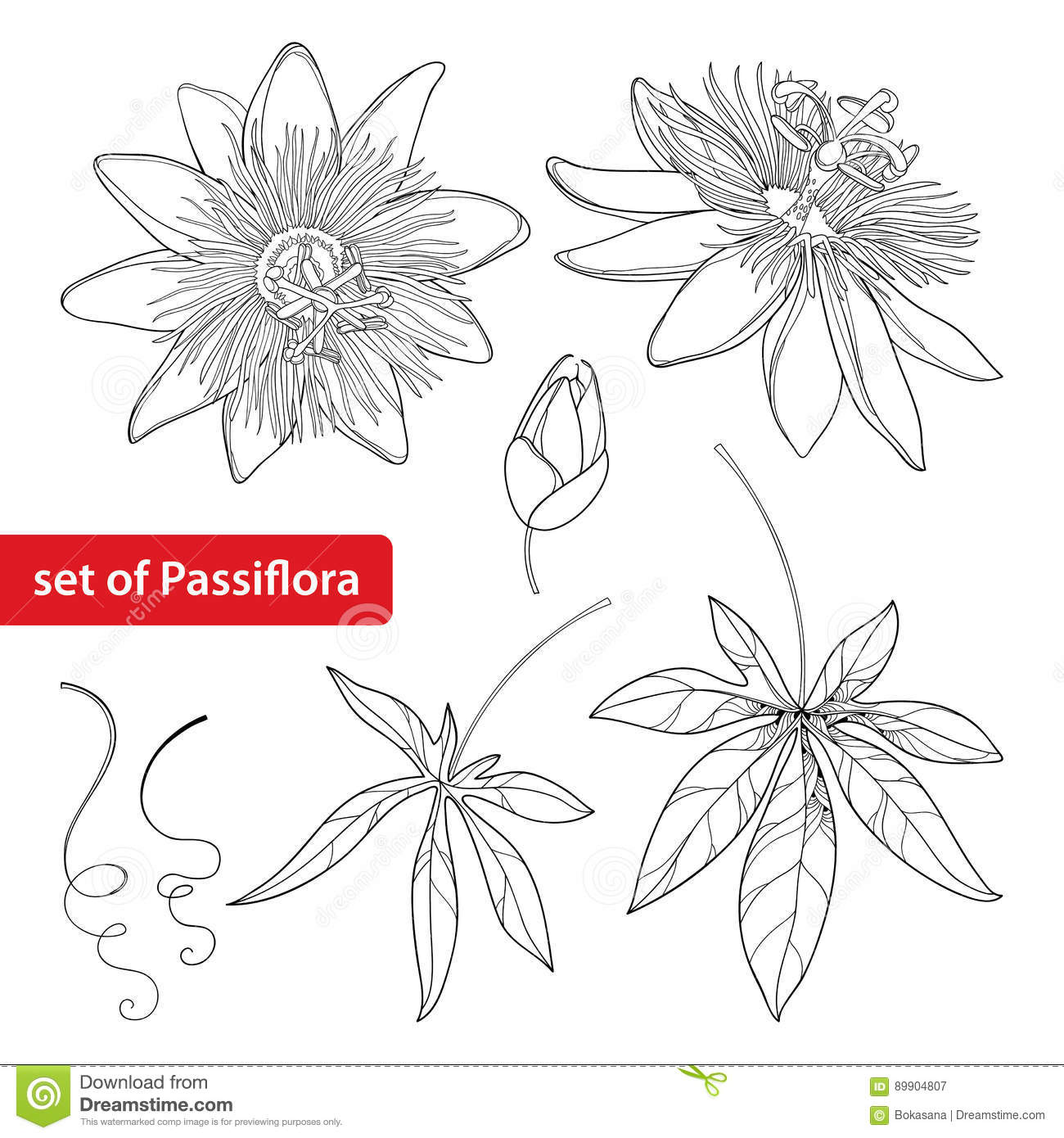 Vector Set With Outline Tropical Passiflora Or Passion Flower