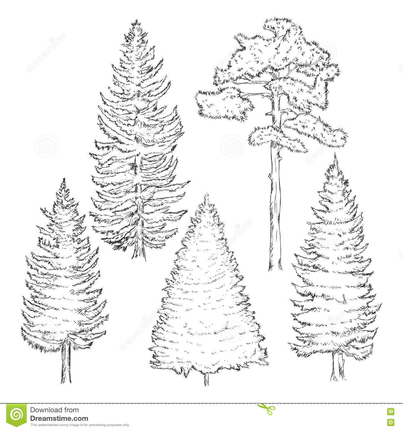 Vector Set Of Sketch Pine Trees Stock Illustration - Illustration of ...