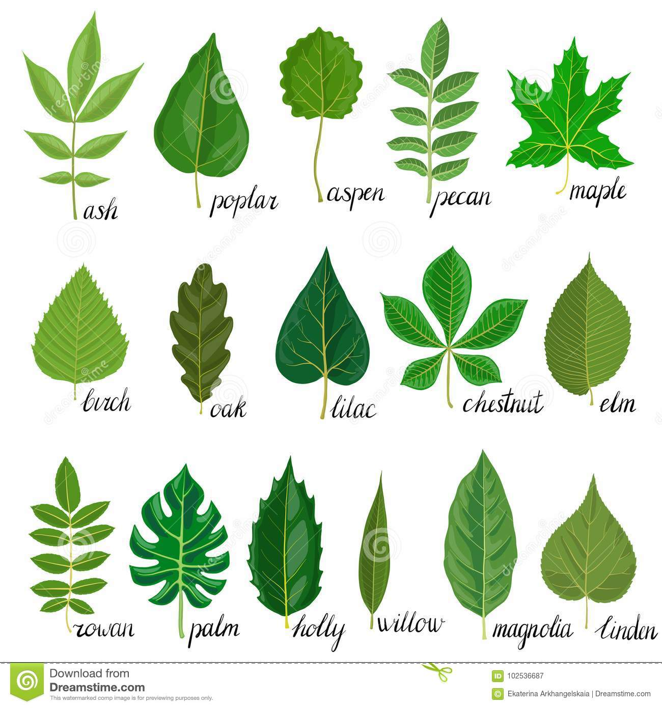 Vector Set Of Tree Leaves Stock Vector Illustration Of