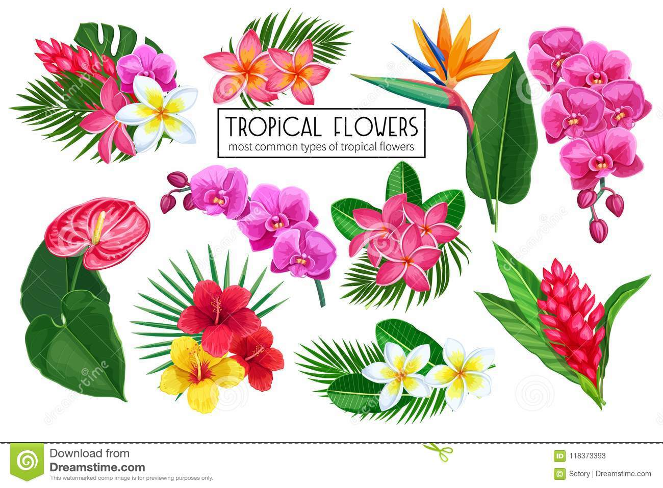 Vector Set Tropical Flowers Stock Vector Illustration Of Hawaiian