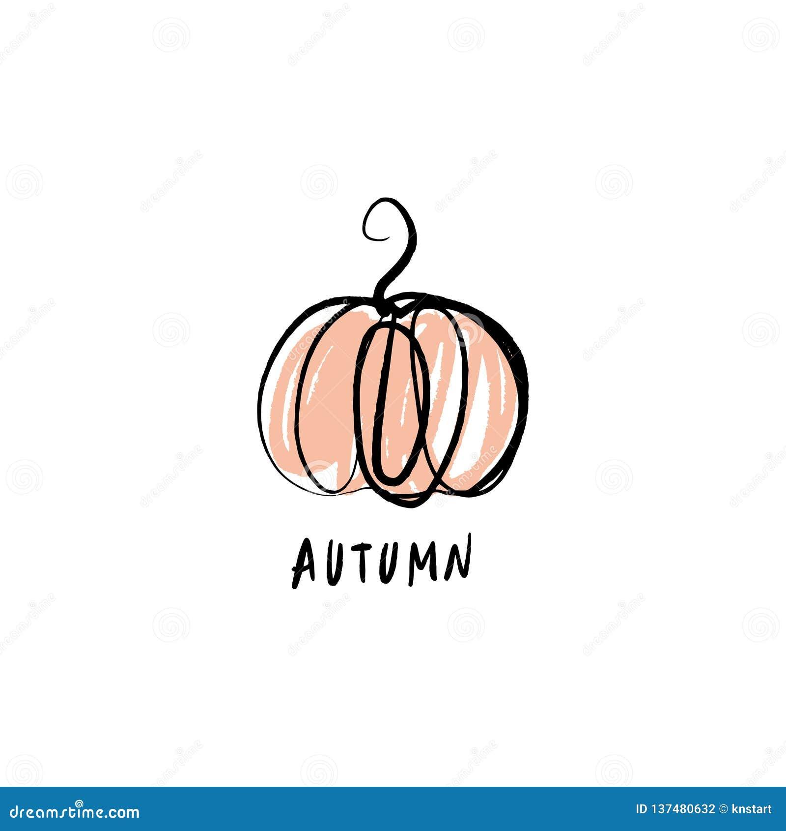 Vector single pumpkin line sketch, hand drawn illustration. Logo, label element. Orange color stock photography