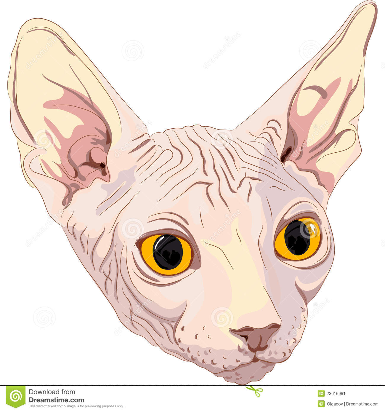 Vector Sketch The Cat Breed Sphynx Stock Image - Image 23016991