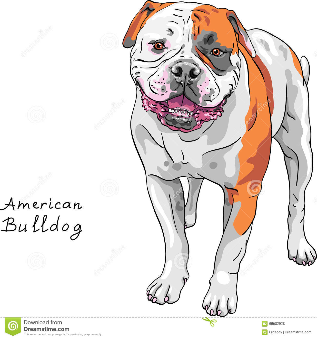 American bulldog vector - photo#26