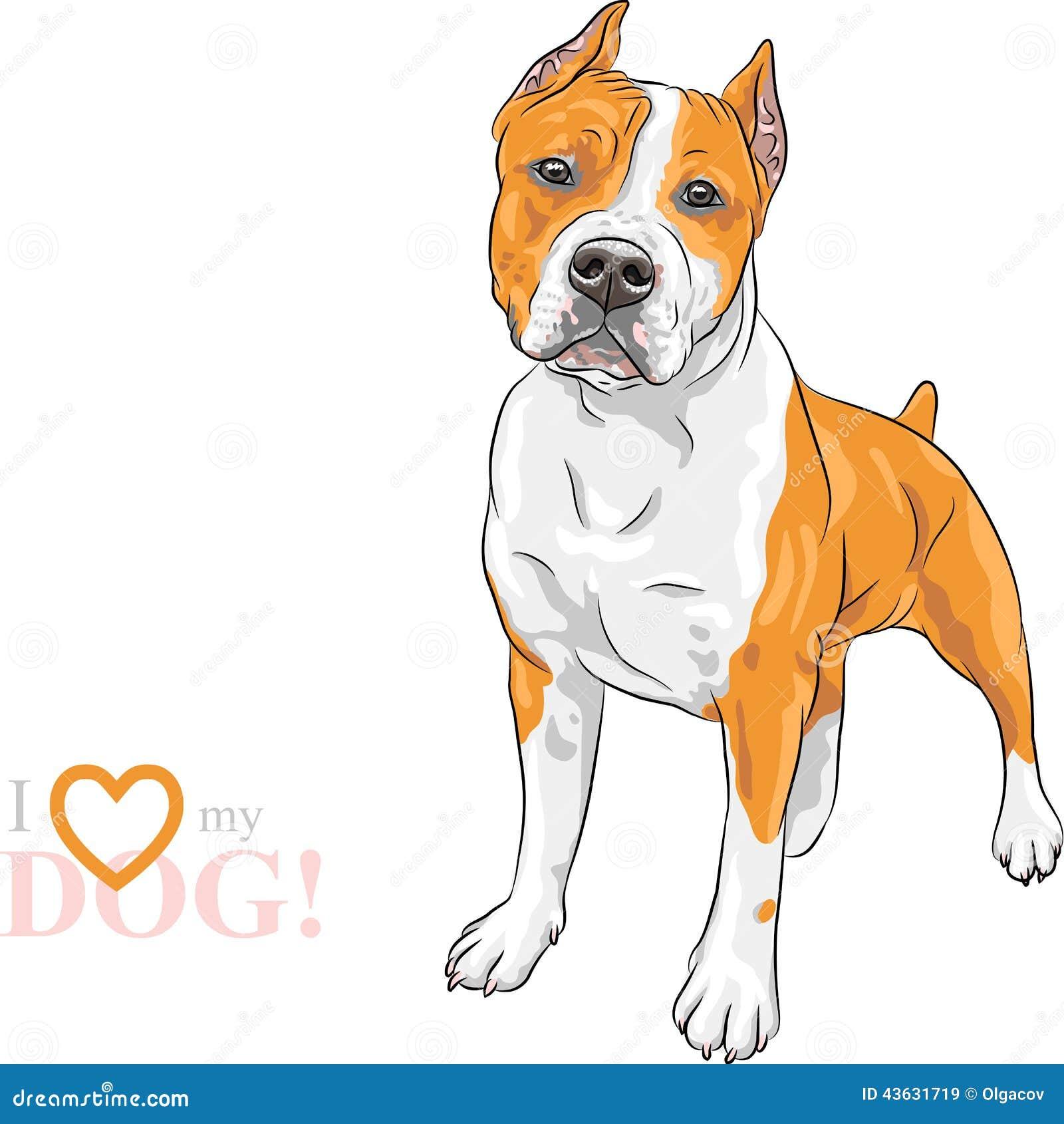 Vector sketch dog american staffordshire terrier breed stock vector