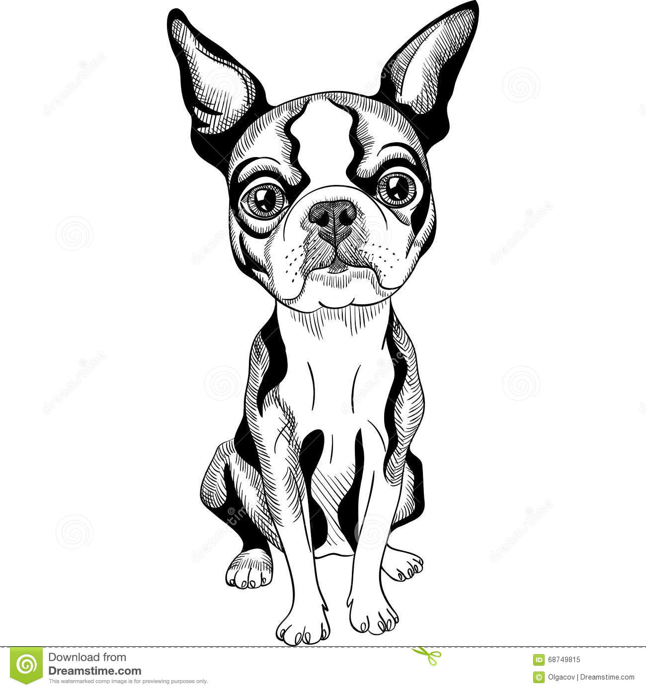 how to draw a boston terrier dog