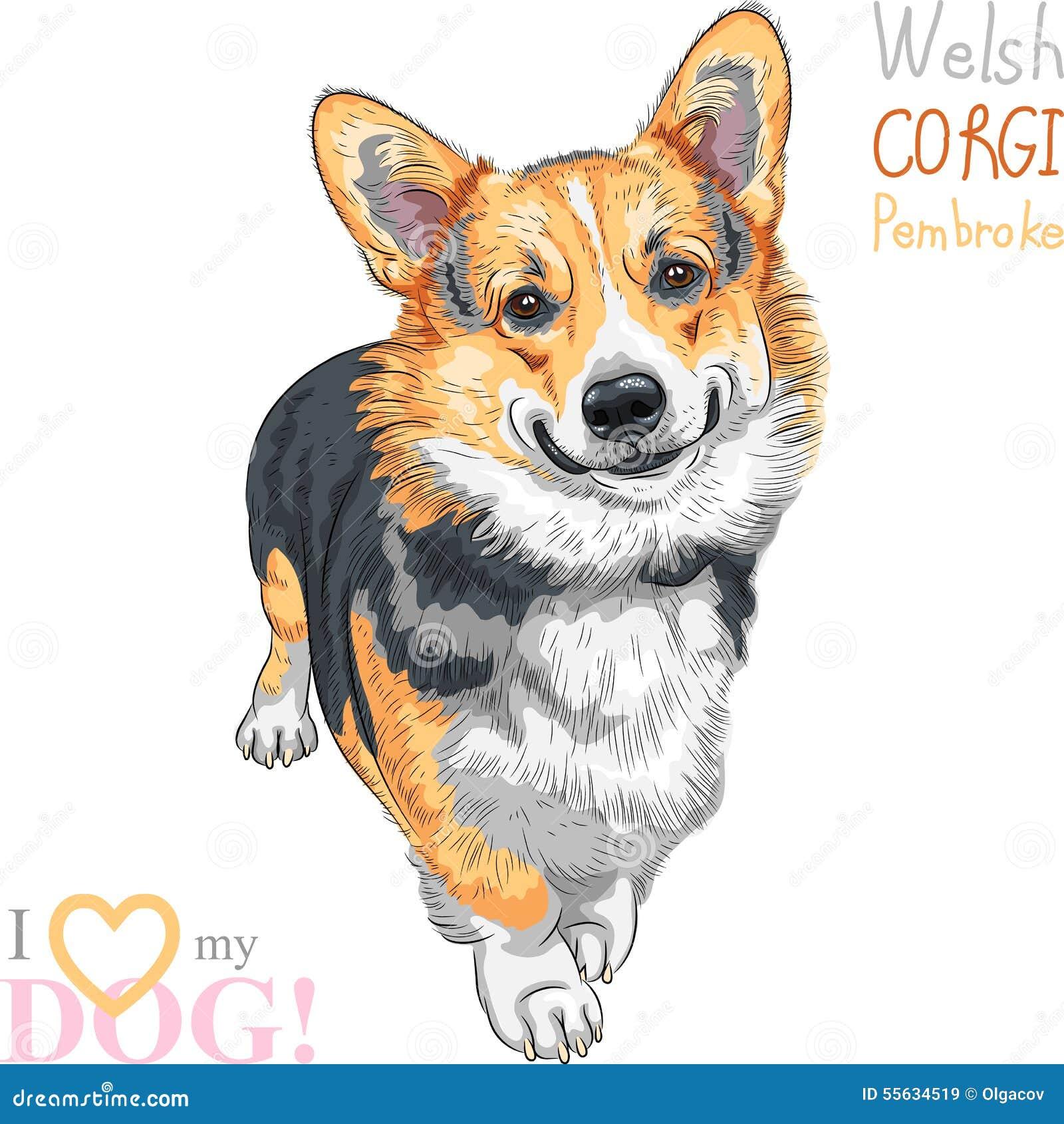 vector sketch dog pembroke welsh corgi smiling stock